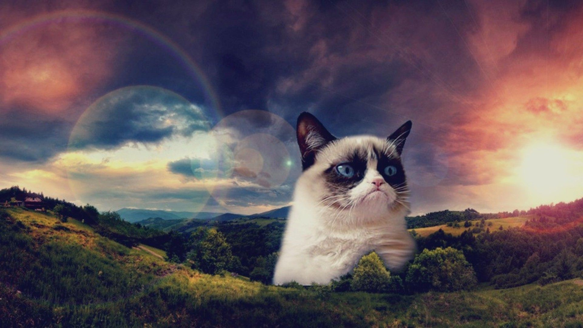 Res: 1920x1080,  Download Cat wallpapers to your cell phone cat galaxy shades  1920×1080