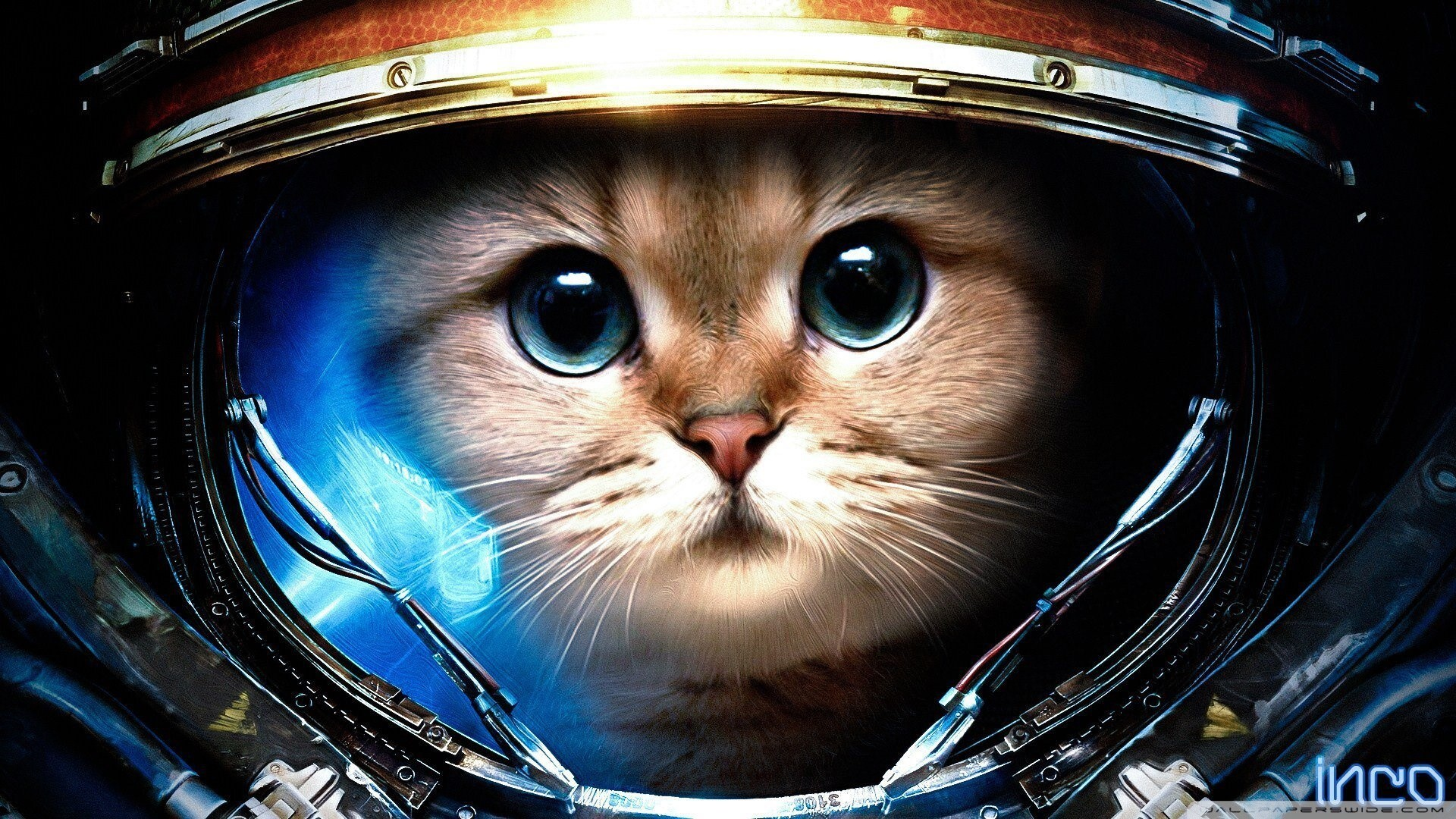 Res: 1920x1080, Tags :Space Cat