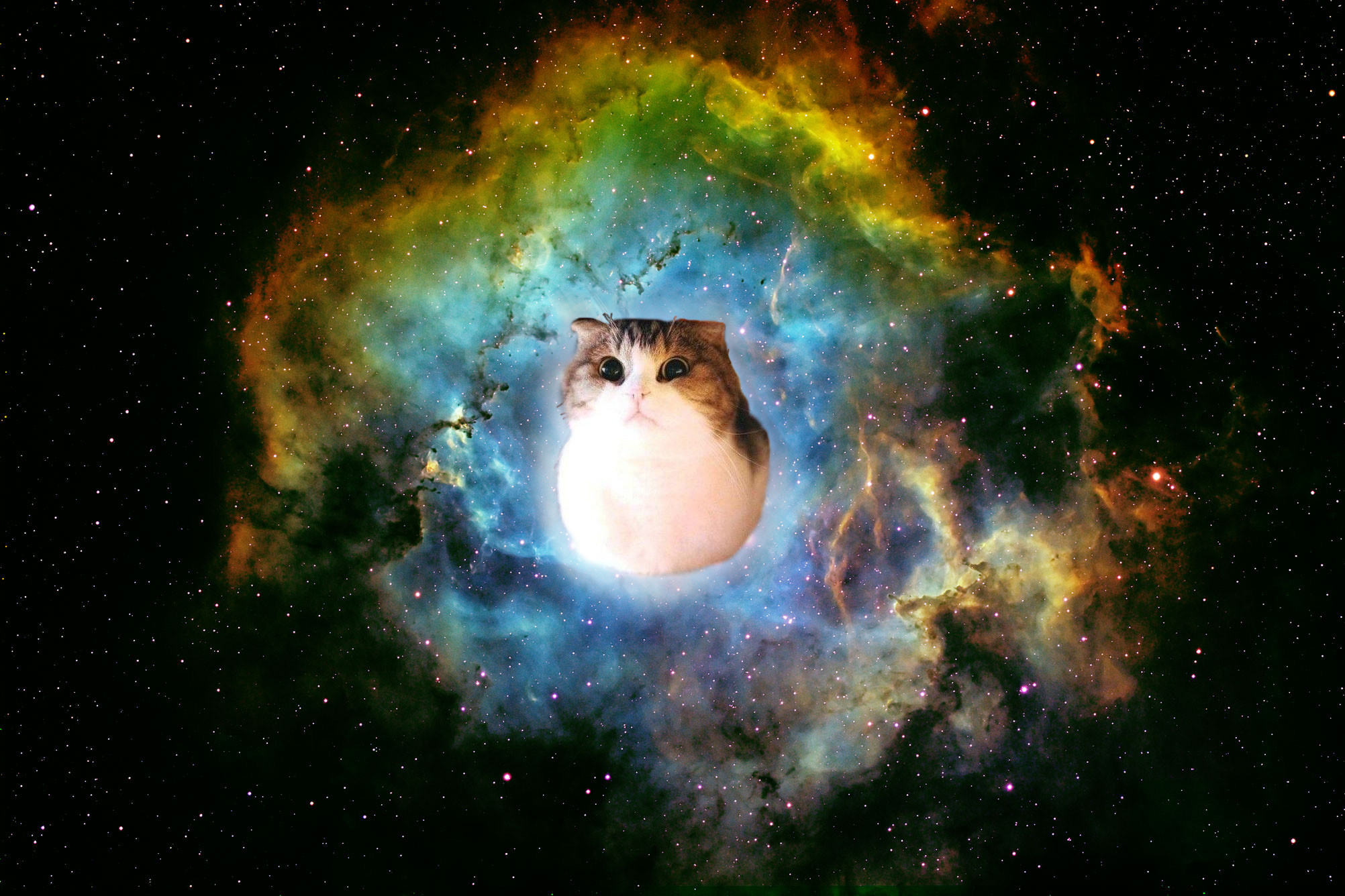 Res: 2004x1336, Space Cat Wallpapers Hd Resolution