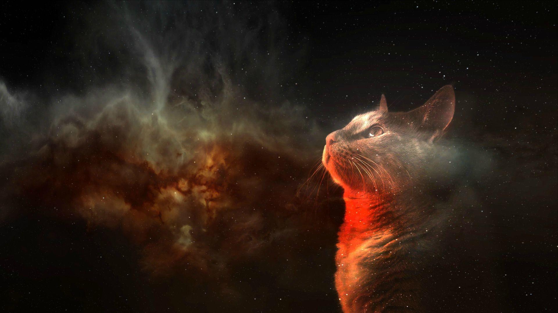 Res: 1920x1080, Humor - Cat Space Wallpaper
