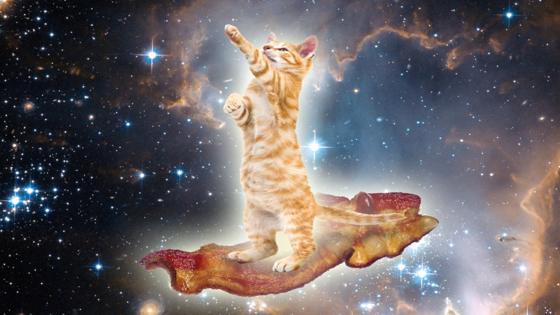 Res: 1920x1080, Bacon wallpapers universe. | Cat cruising through space ...