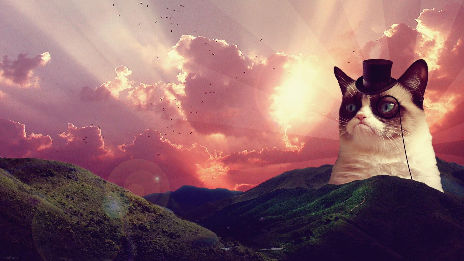 Res: 1920x1080, Space laser cat photo wallpapers.