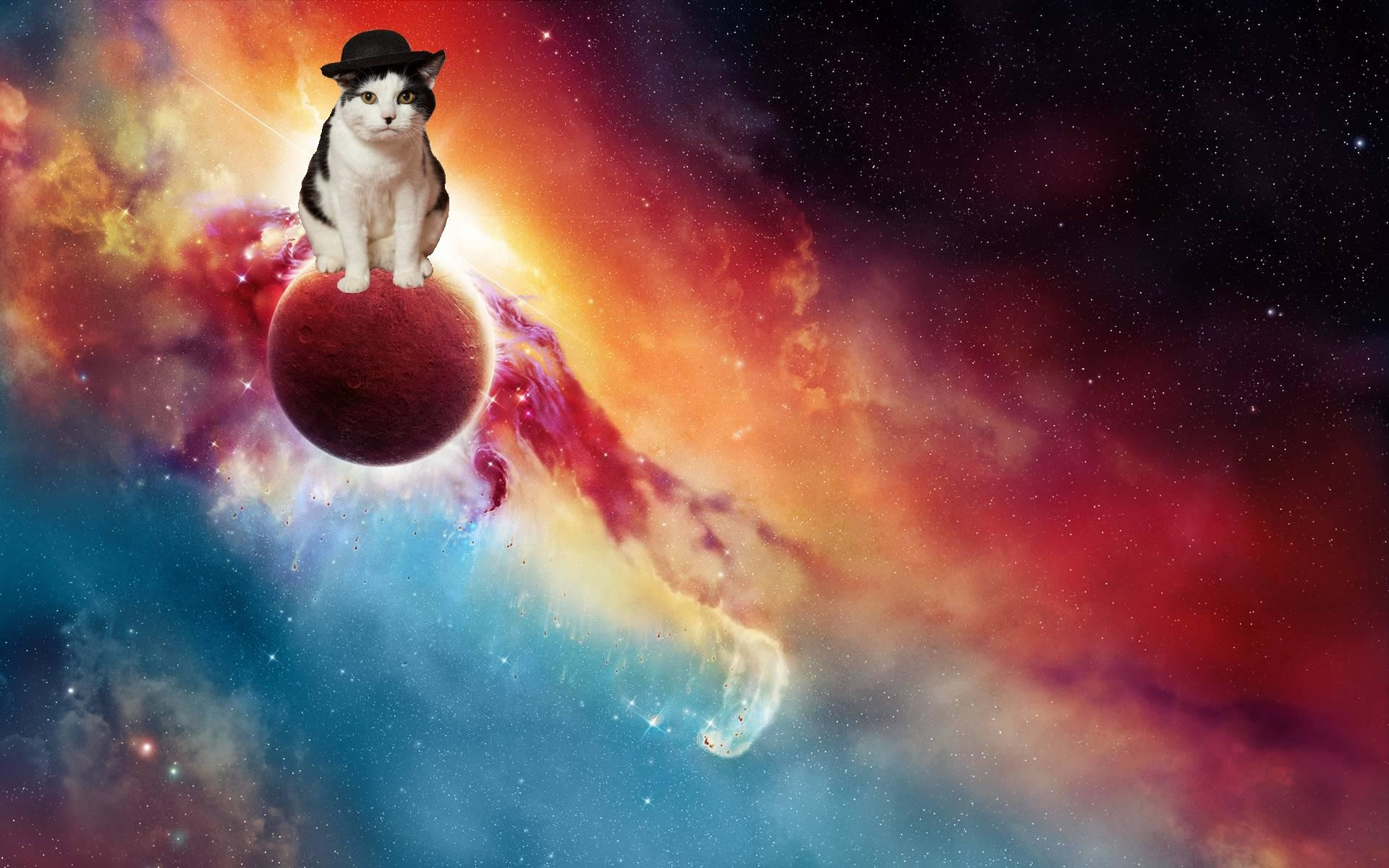 Res: 1920x1200, Space Cat Wallpaper Wide