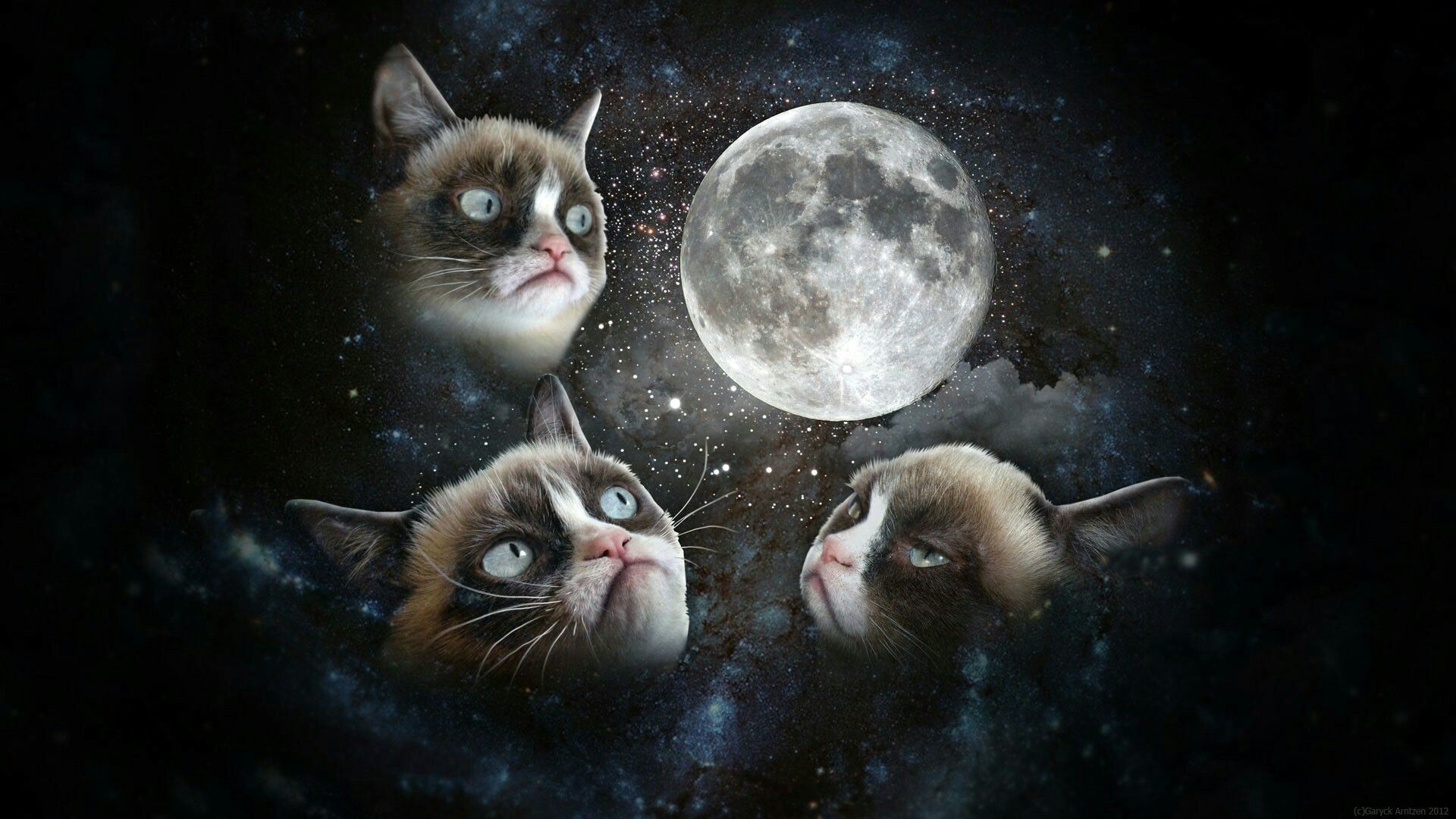 Res: 1920x1080, Discover ideas about Cat Wallpaper