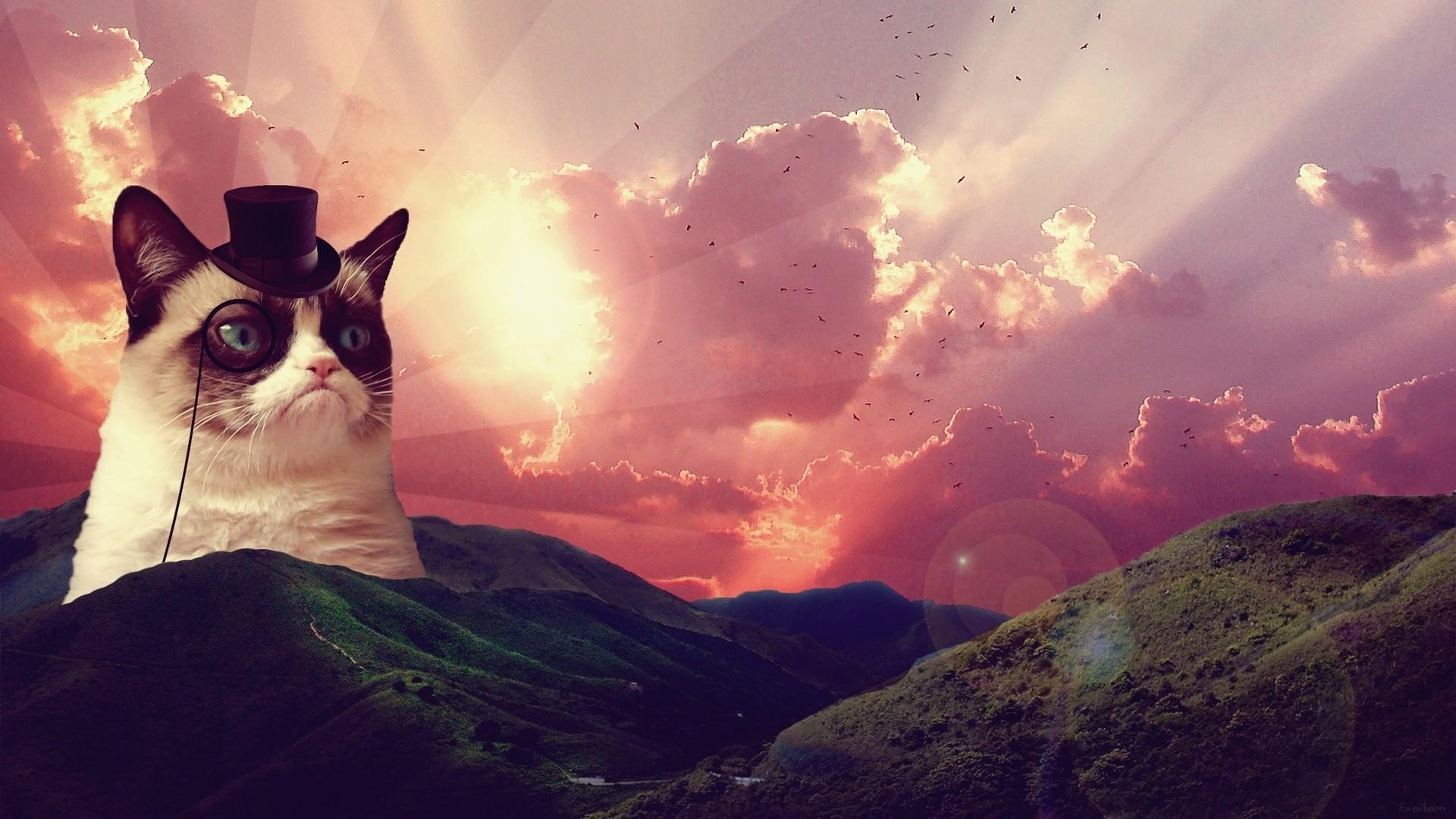 Res: 1920x1080, ... Grumpy Cat Full HD Quality Wallpapers ...