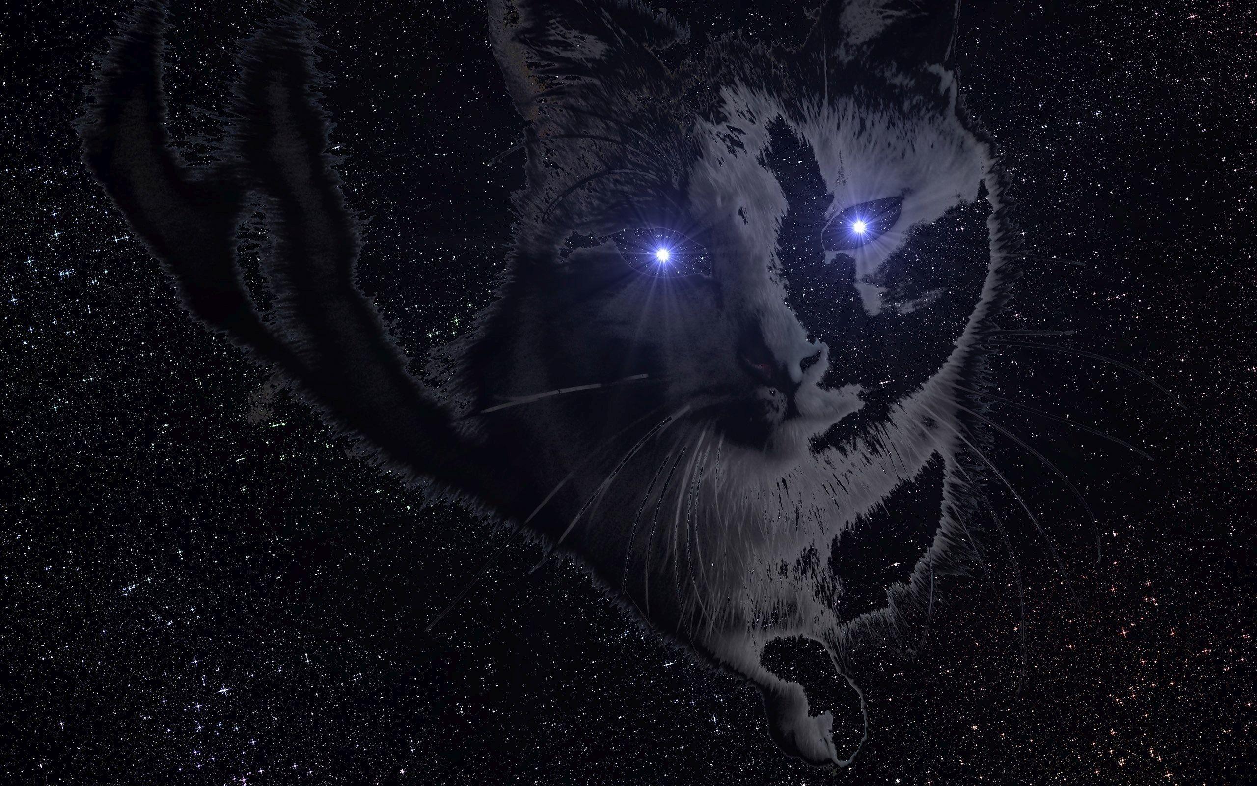 Res: 2560x1600, ... Space cat HD Wallpaper
