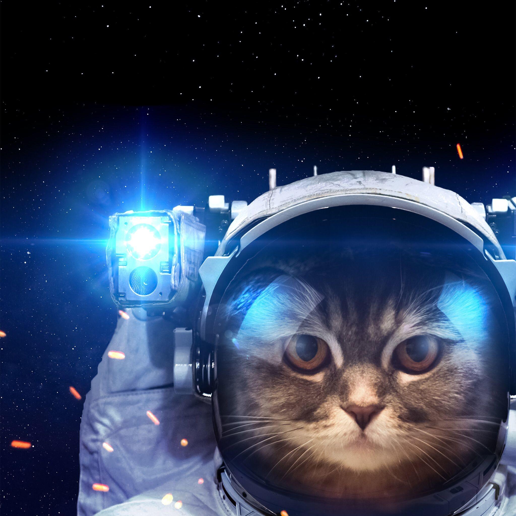 Res: 2048x2048, Explore Space Cat, Cat Wallpaper, and more!