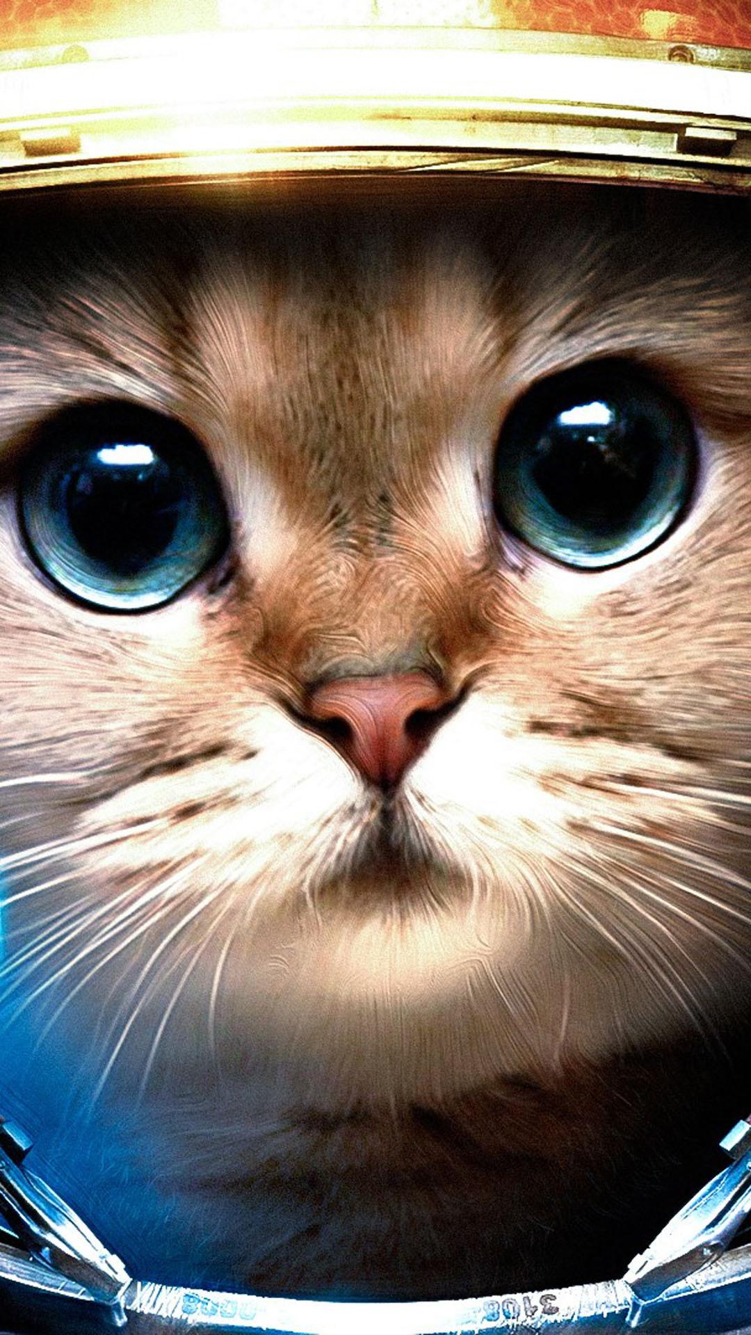 Res: 1080x1920, Marvelous Cat Iphone Backgrounds | Pixelstalk As Iphone 5 Space Cat  Wallpaper