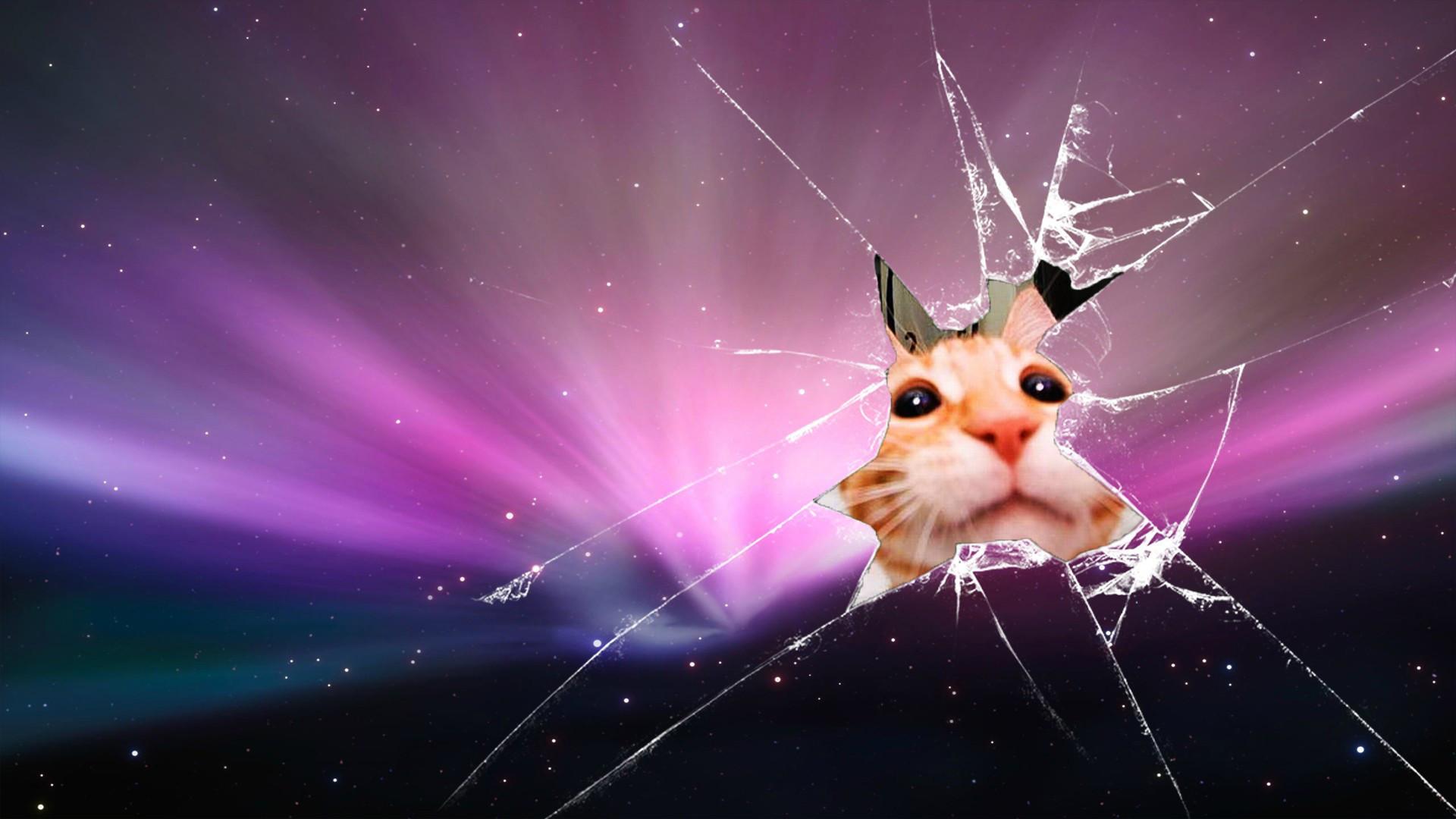 Res: 1920x1080,  #Cats #wallpaper : Broken Glass Hd