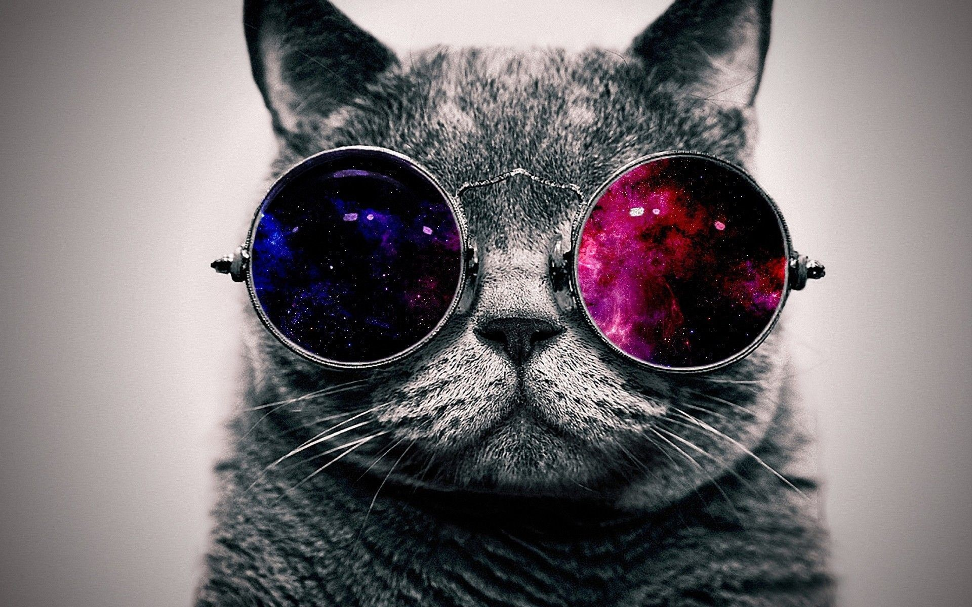 Res: 1920x1200, Space Cat Wallpaper Mobile | wallpapers | Pinterest | Cats