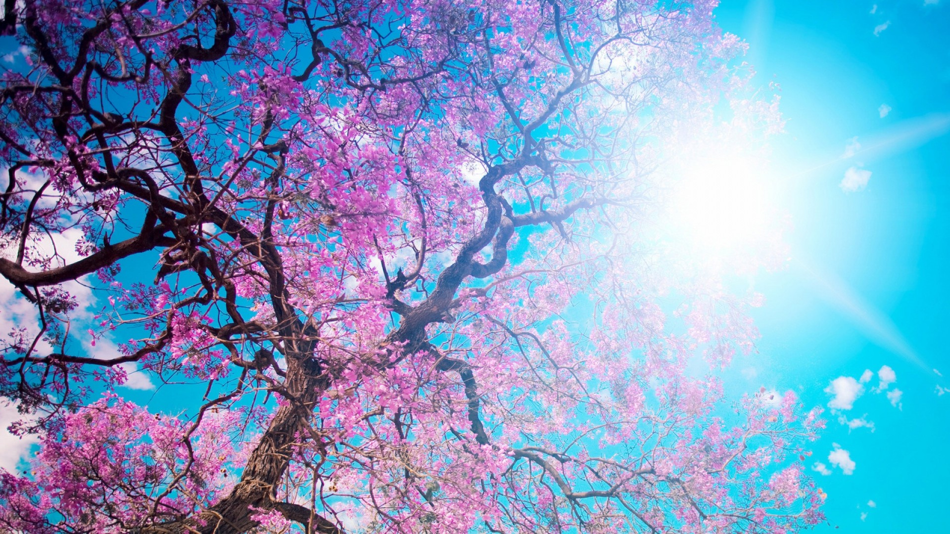 Res: 1920x1080, o-hanami, blossom festival and to enjoy the cherry blossoms, japan