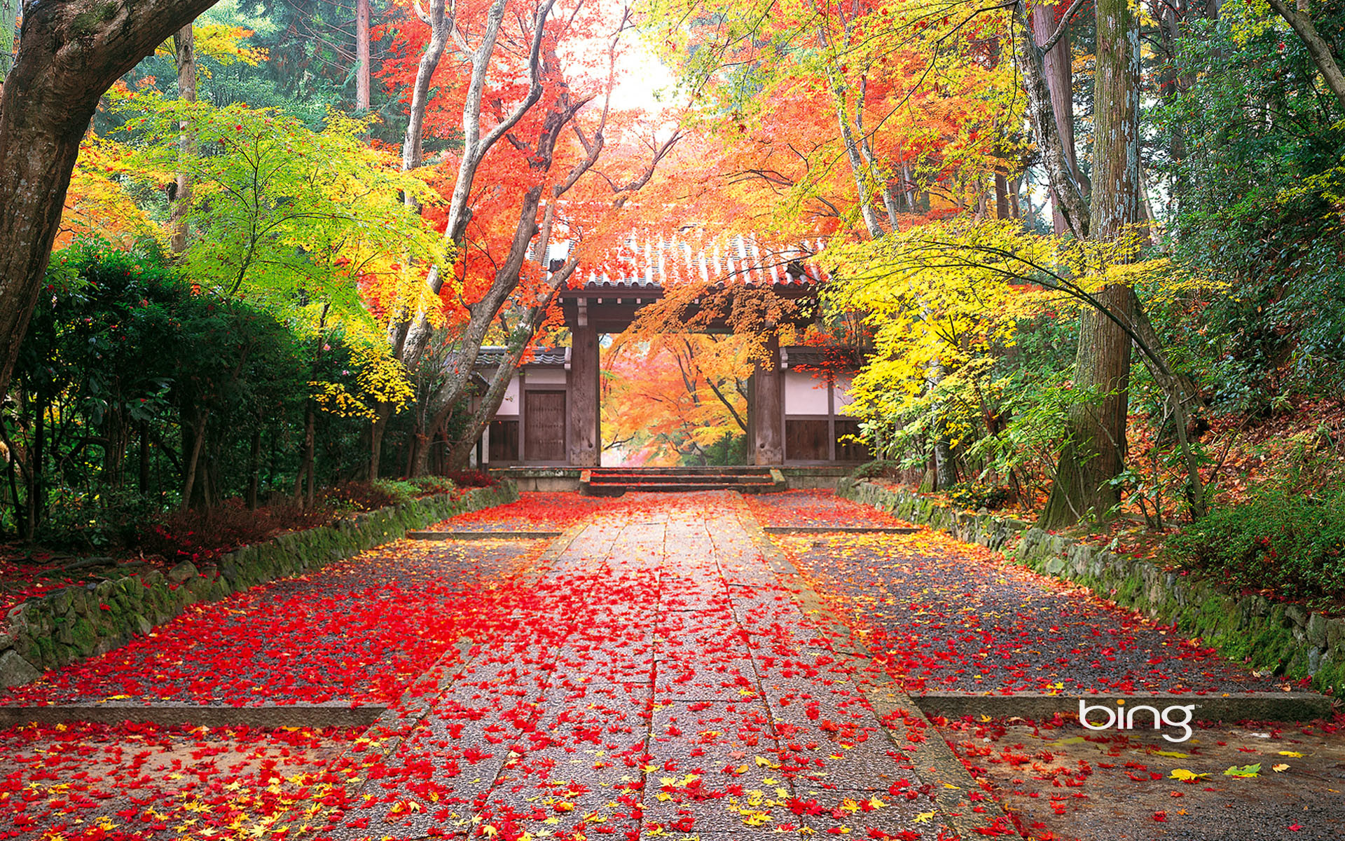 Res: 1920x1200, Tags: Autumn Japan