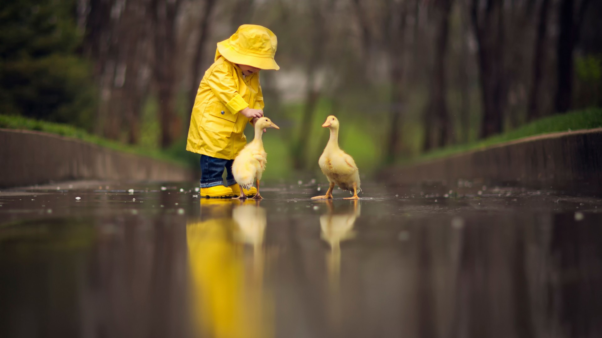 Res: 1920x1080, Small child with ducks [] ...