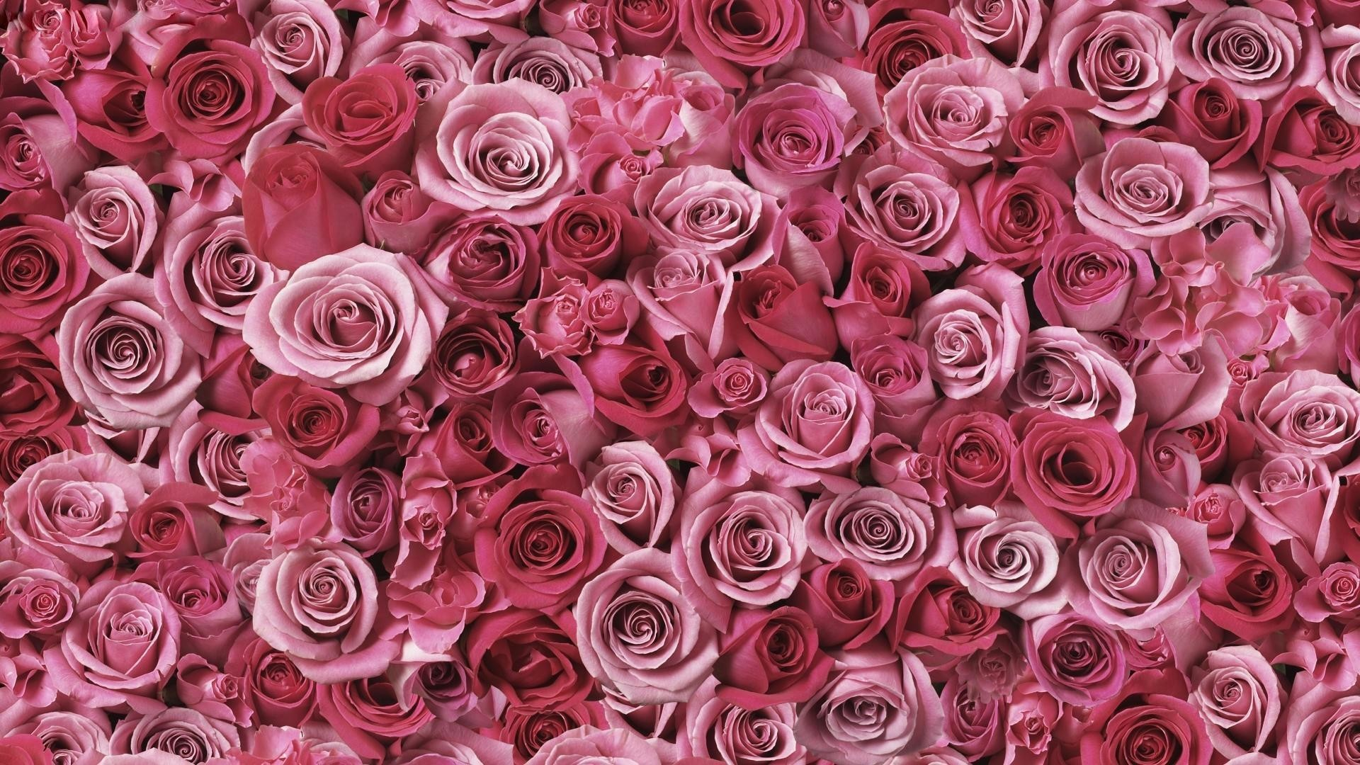 Res: 1920x1080,  Glitter-pink-vs-wallpaper-phone