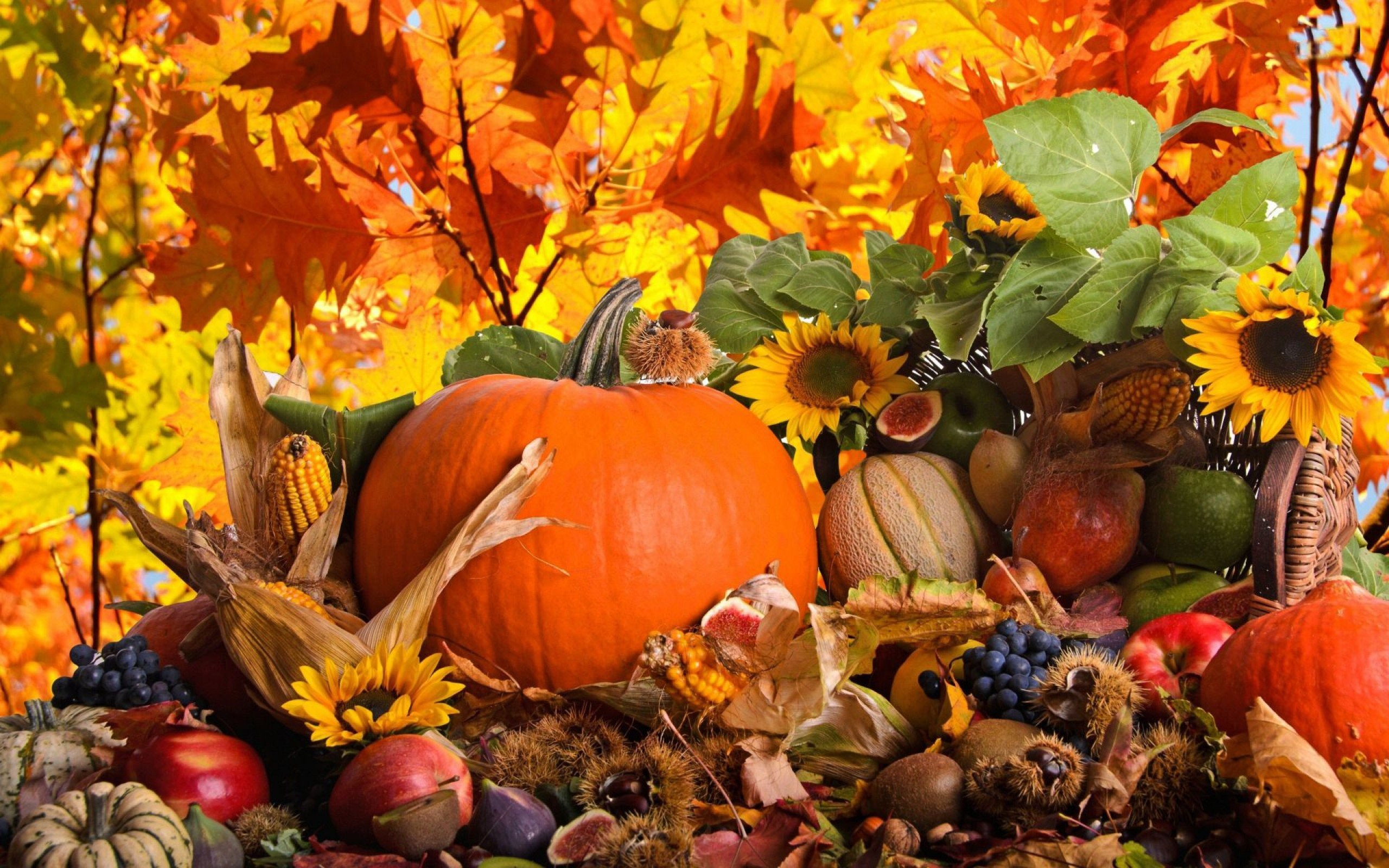 Res: 2560x1600, Top 15+ Images for Fall Leaves Thanksgiving Wallpaper | Image No: 17. File