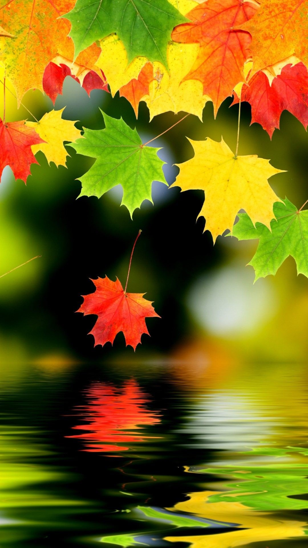 Res: 1080x1920, Autumn iPhone 6 Plus Wallpaper 13840 - Nature iPhone 6 Plus Wallpapers