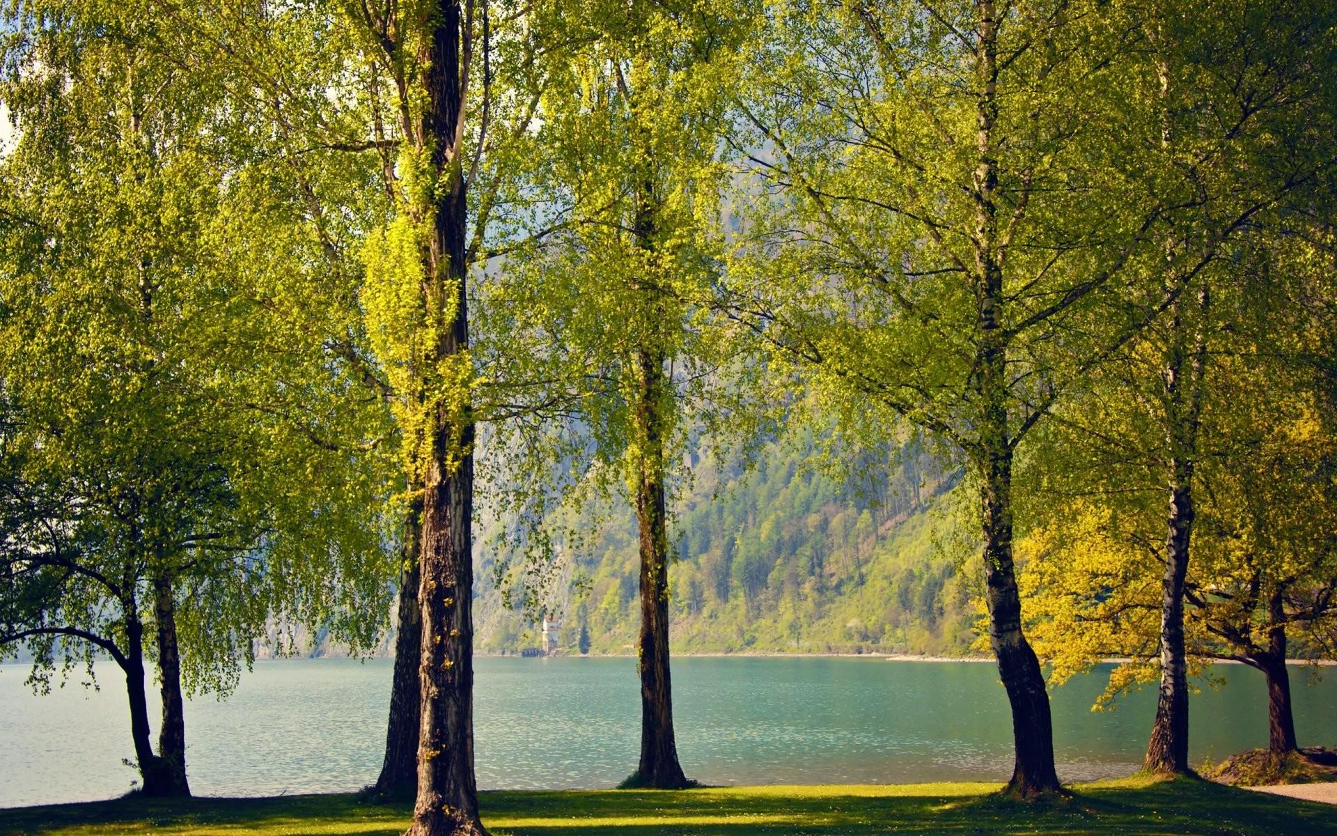 Res: 1920x1200, switzerland spring birch tree lake nature