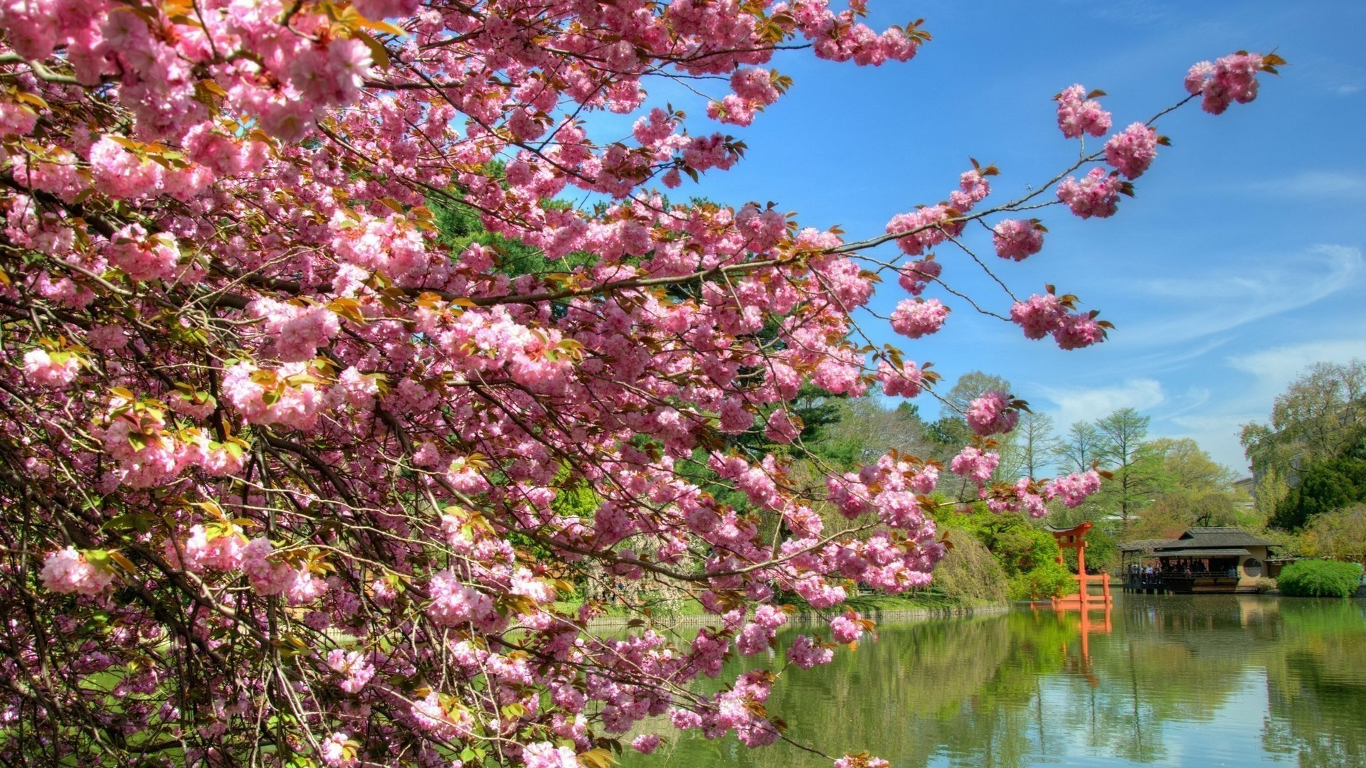 Res: 1920x1080, Download Forests Japan Nature Blossoms Cherry Lake Lakes Trees Oriental  Park Earth Forest Wallpapers
