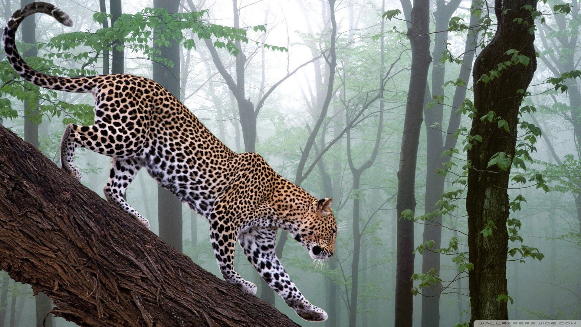 Res: 1920x1080, Image for Jungle Animals Real Life Cool Wallpapers