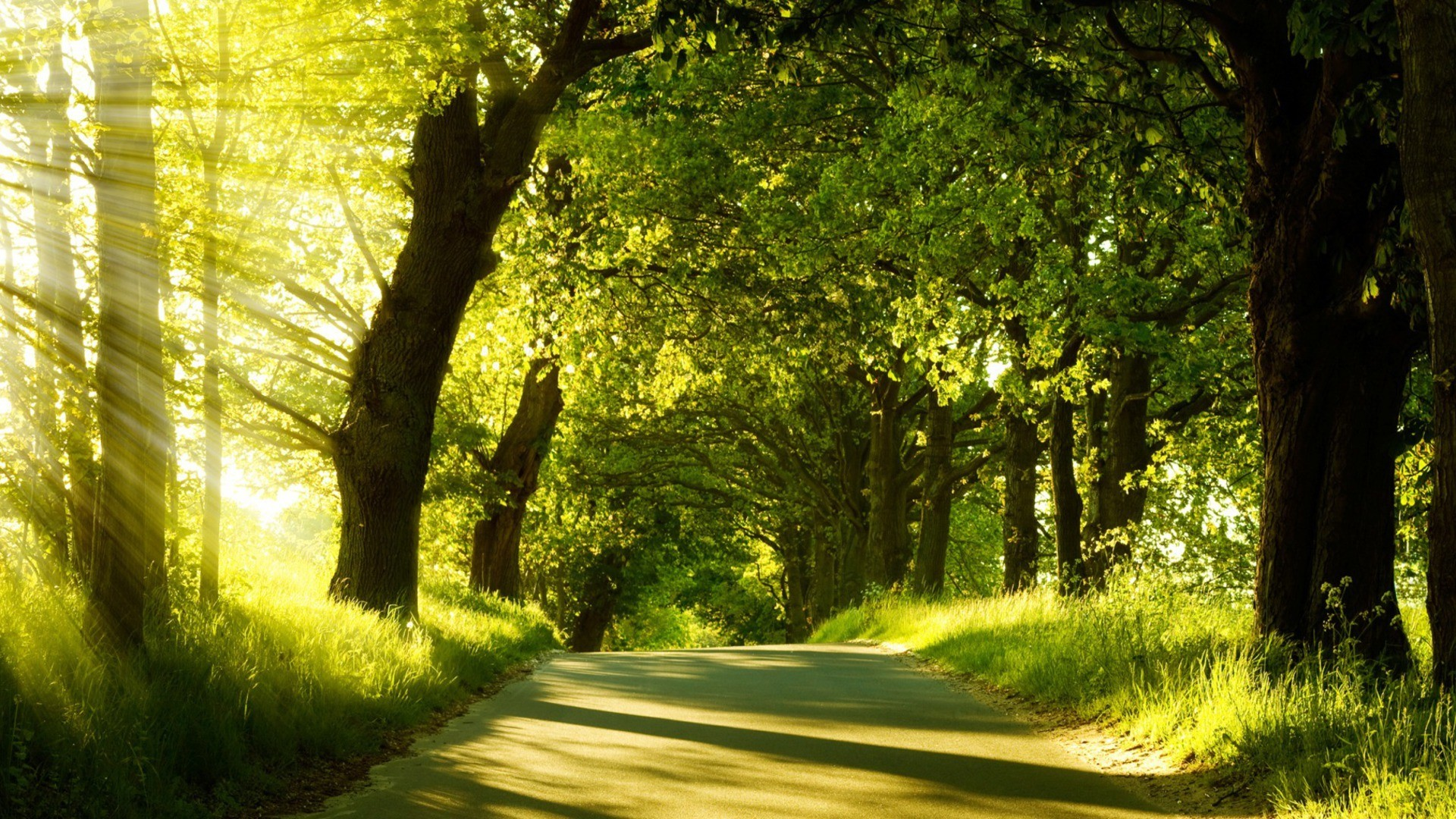 Res: 1920x1080, Image for Landscape Photography Trees Background Wallpaper
