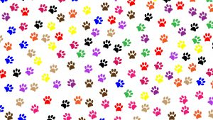 Dog Paws wallpapers
