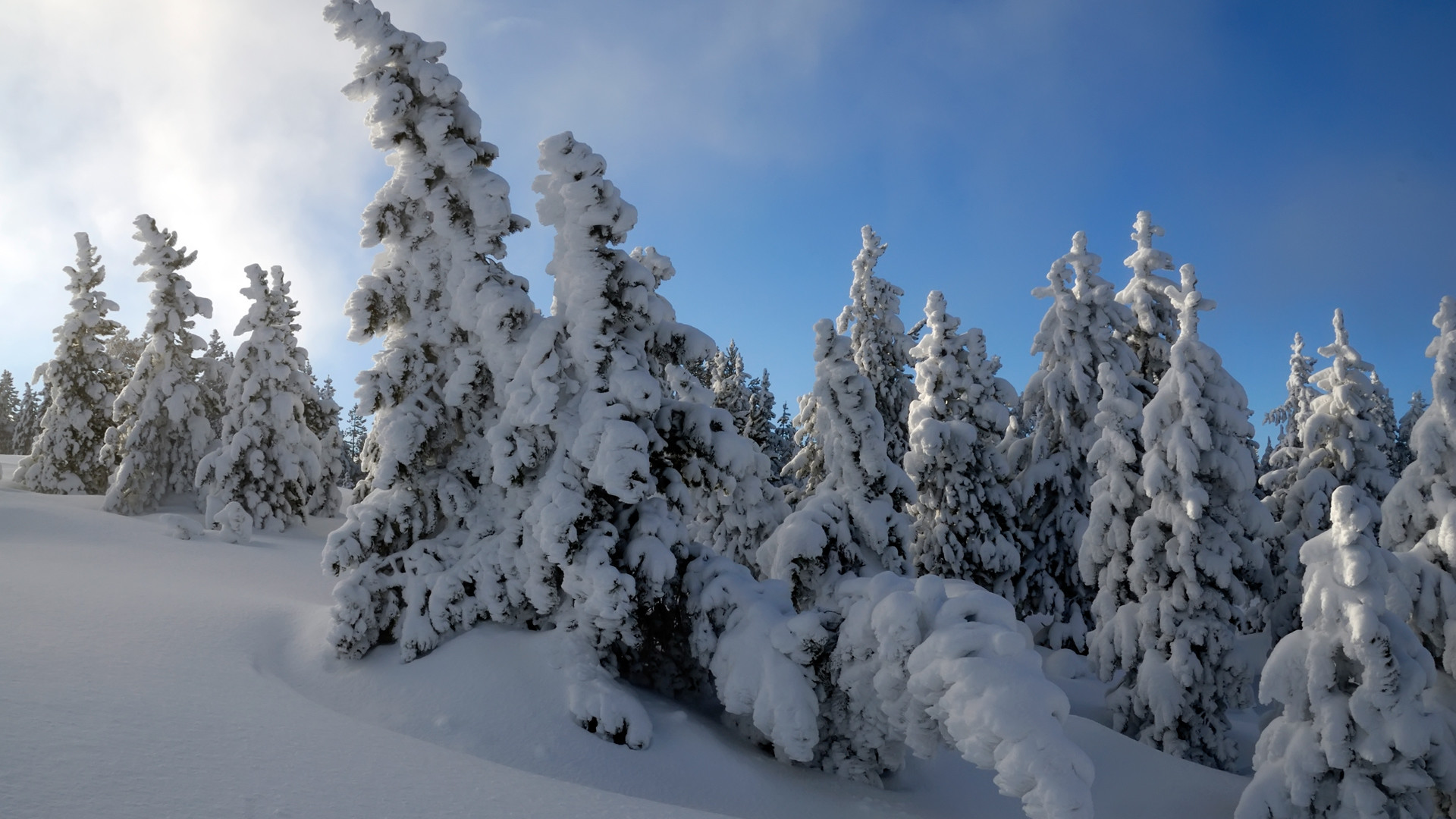 Res: 1920x1080, Snow Trees HDTV 1080p