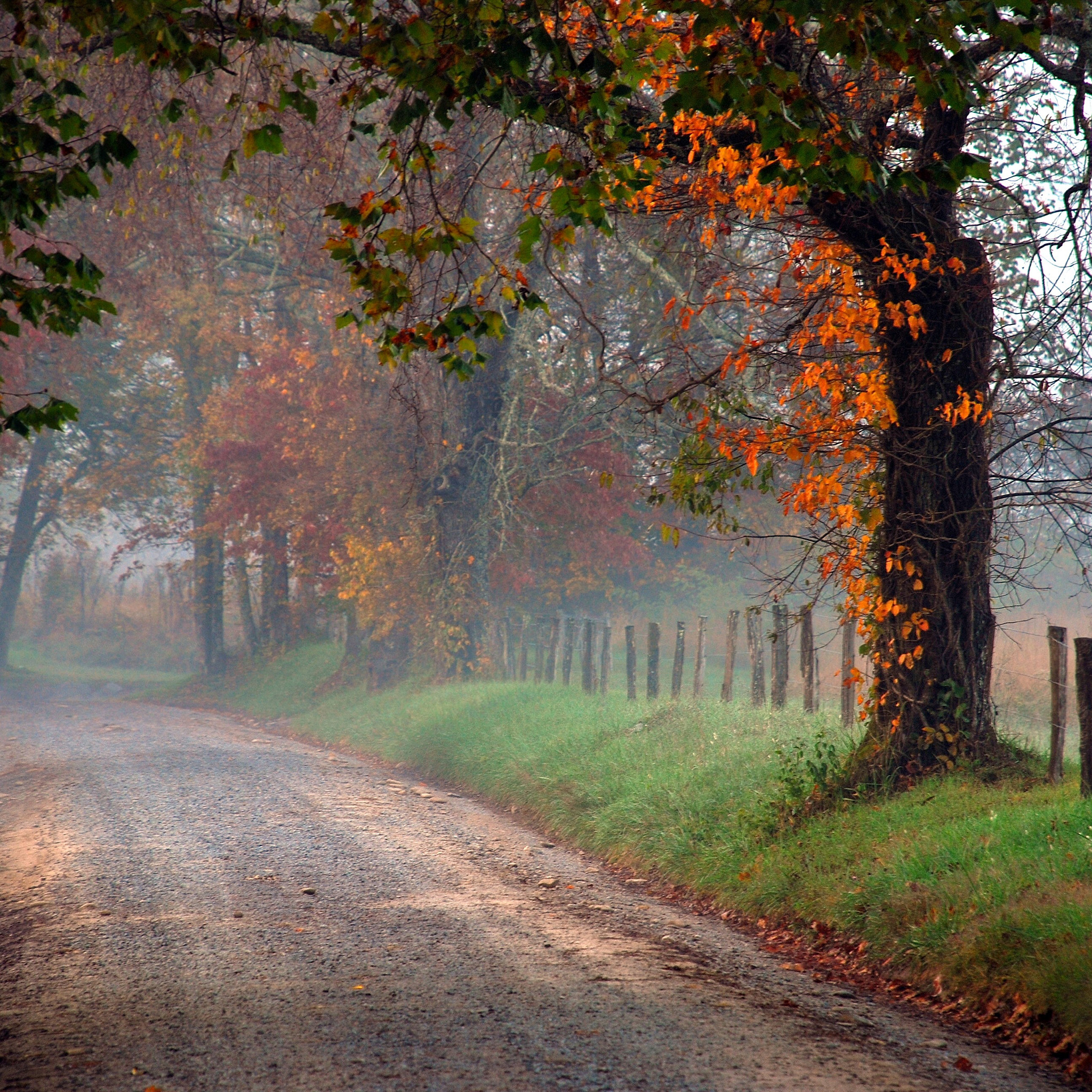 Res: 2048x2048, Fall on the Country Road 3Wallpapers iPad Retina Fall on the Country Road  iPad Retina