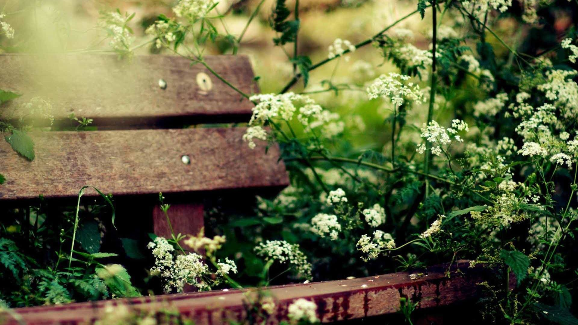 Res: 1920x1080,  The country and cute flowers wallpaper wide wallpapers:1280x800,1440x900,1680x1050  -