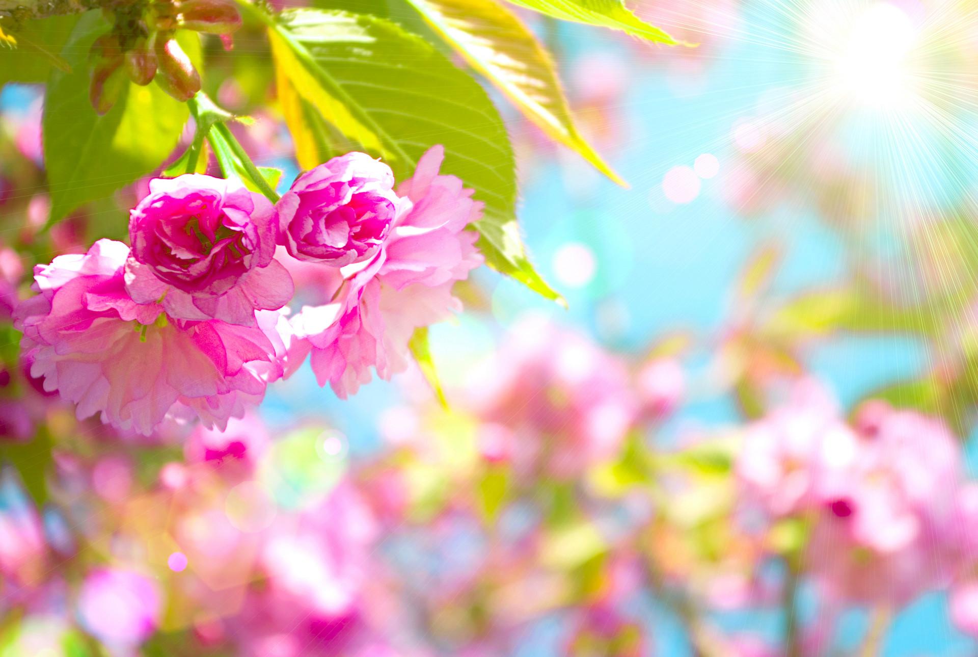 Res: 1920x1289, Art-Images-Spring-Desktop-Wallpaper-HD