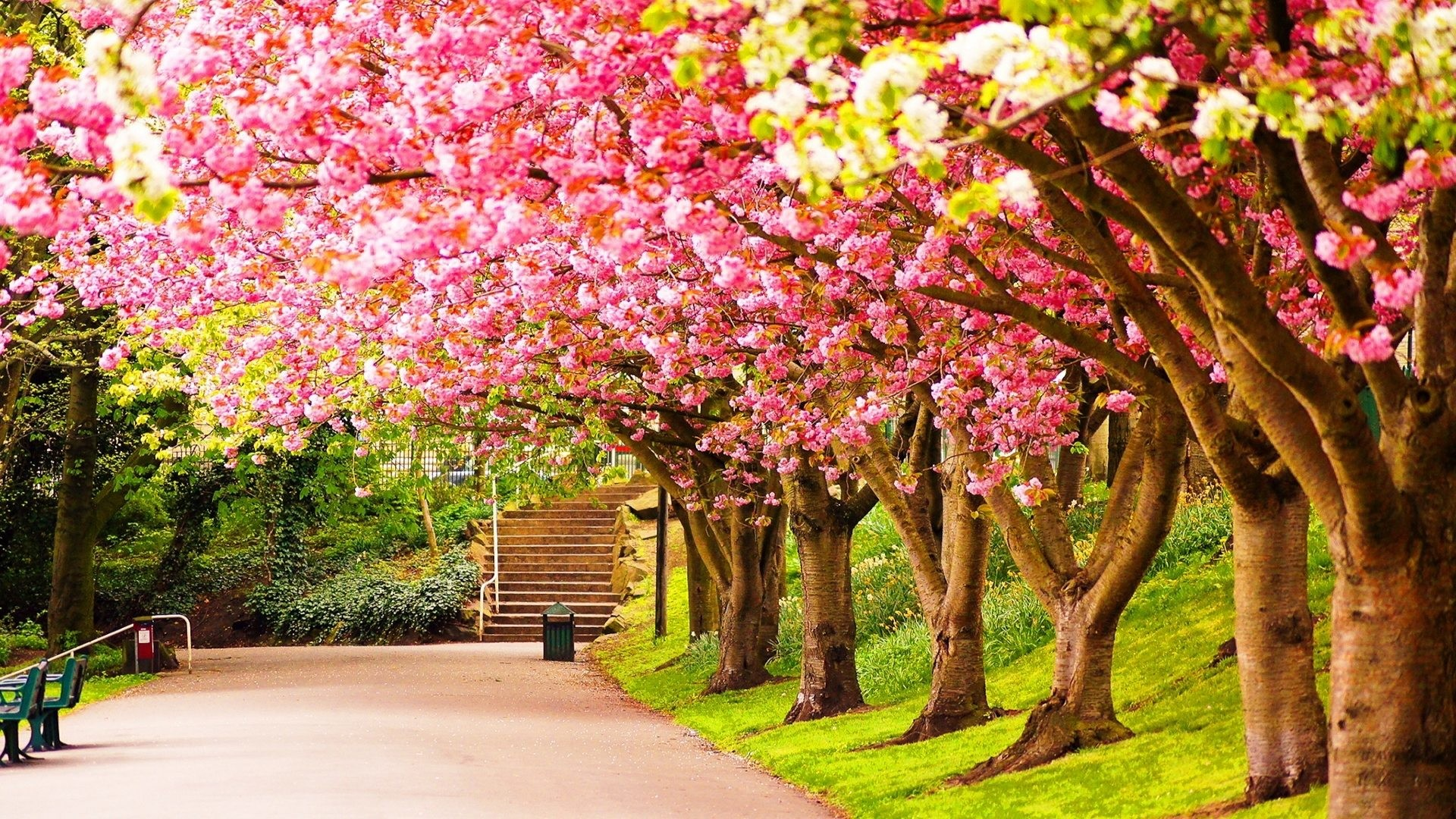 Res: 1920x1080, spring desktop background wallpaper hd wallpapers high definition