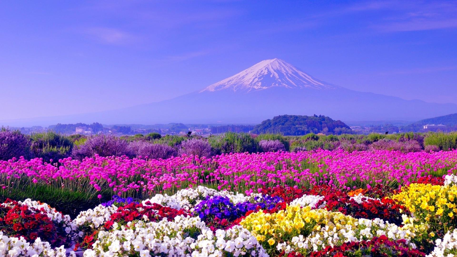 Res: 1920x1080, spring in japan wallpaper hd free download Wallpaper HD
