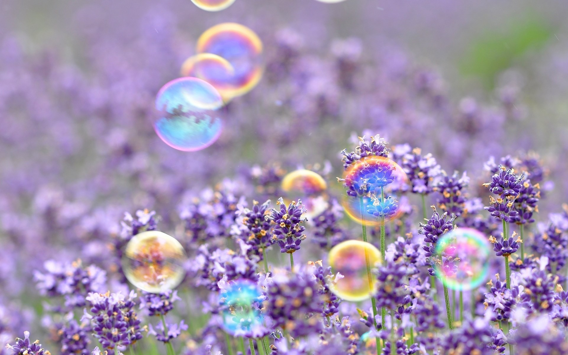 Res: 1920x1200, Purple Spring
