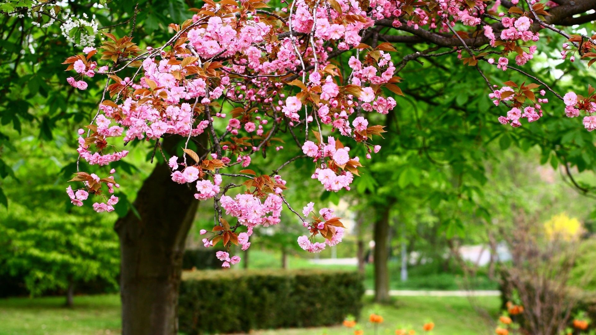 Res: 1920x1080, Ewallpapershub provide the latest image gallery of Spring Desktop Pictures.  View our best collection of