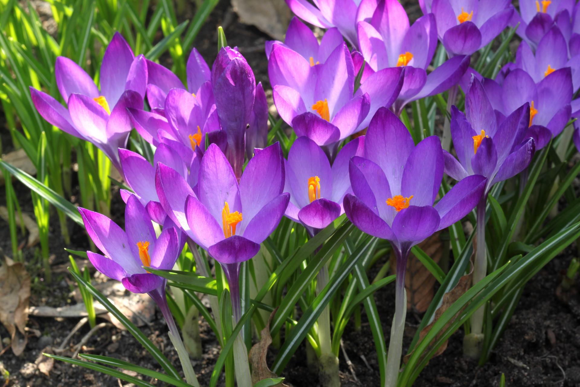 Res: 1920x1280, Free Desktop Wallpapers Spring Flowers - Wallpaper Cave