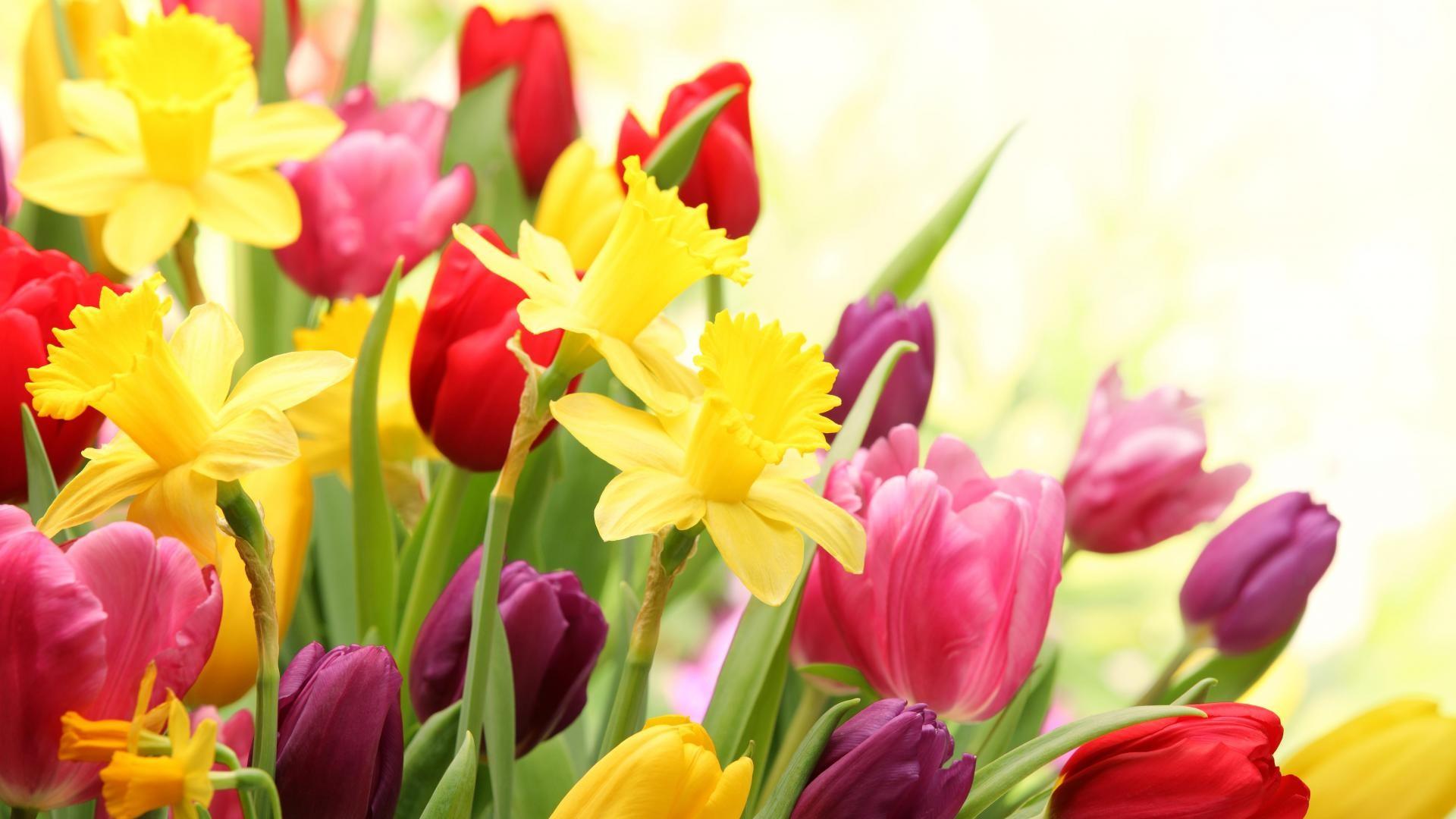 Res: 1920x1080, Explore More 4k Wallpapers. Spring Flowers Wallpapers Desktop
