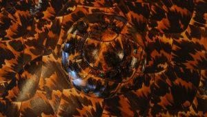 Tortoise Shell wallpapers