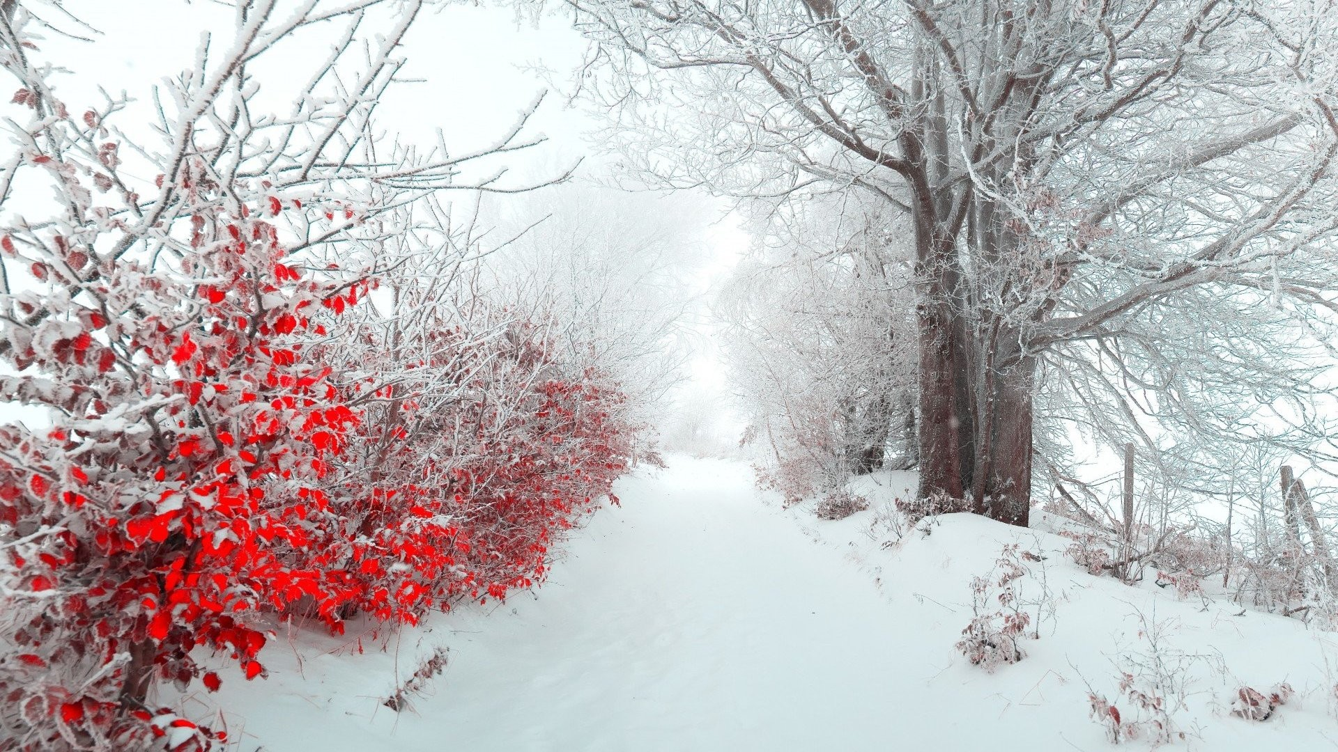 Res: 1920x1080, HD Winter Wallpapers 287 HD Winter Wallpapers 288