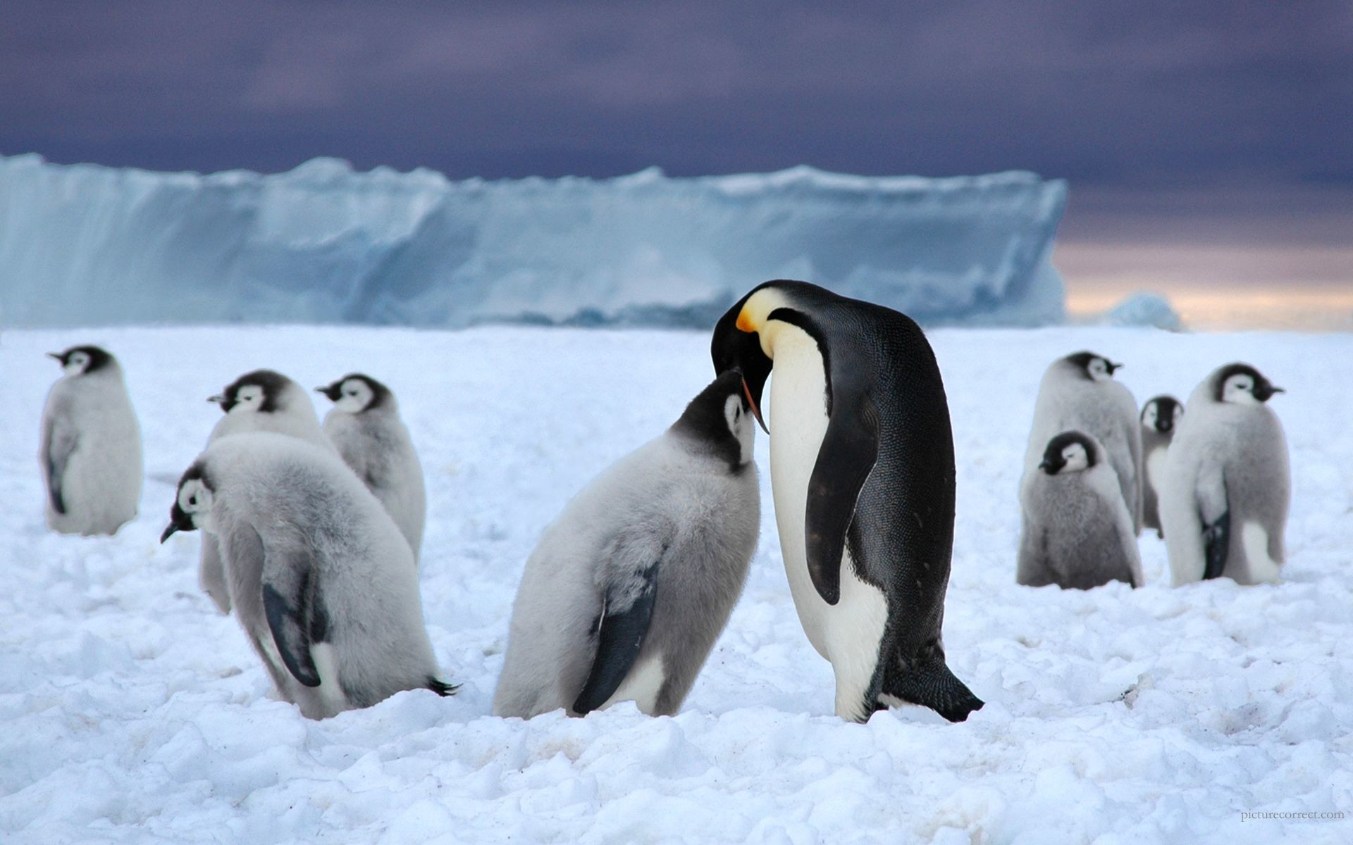 Res: 1920x1200, Cute Winter Penguin Background