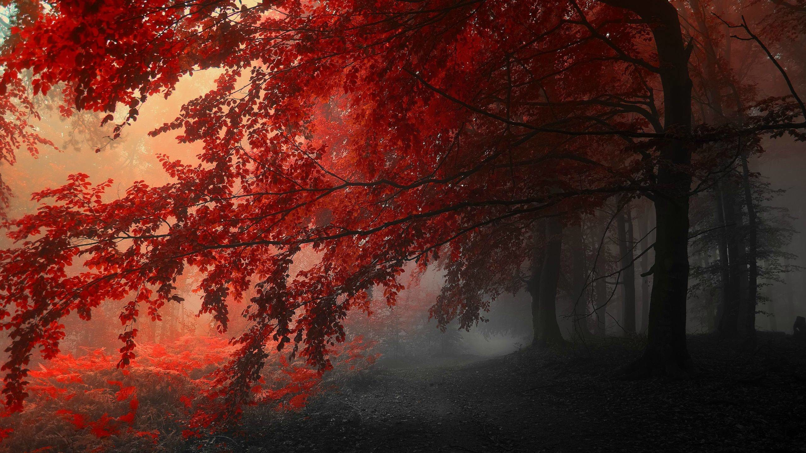 Res: 2560x1440, Red Forest