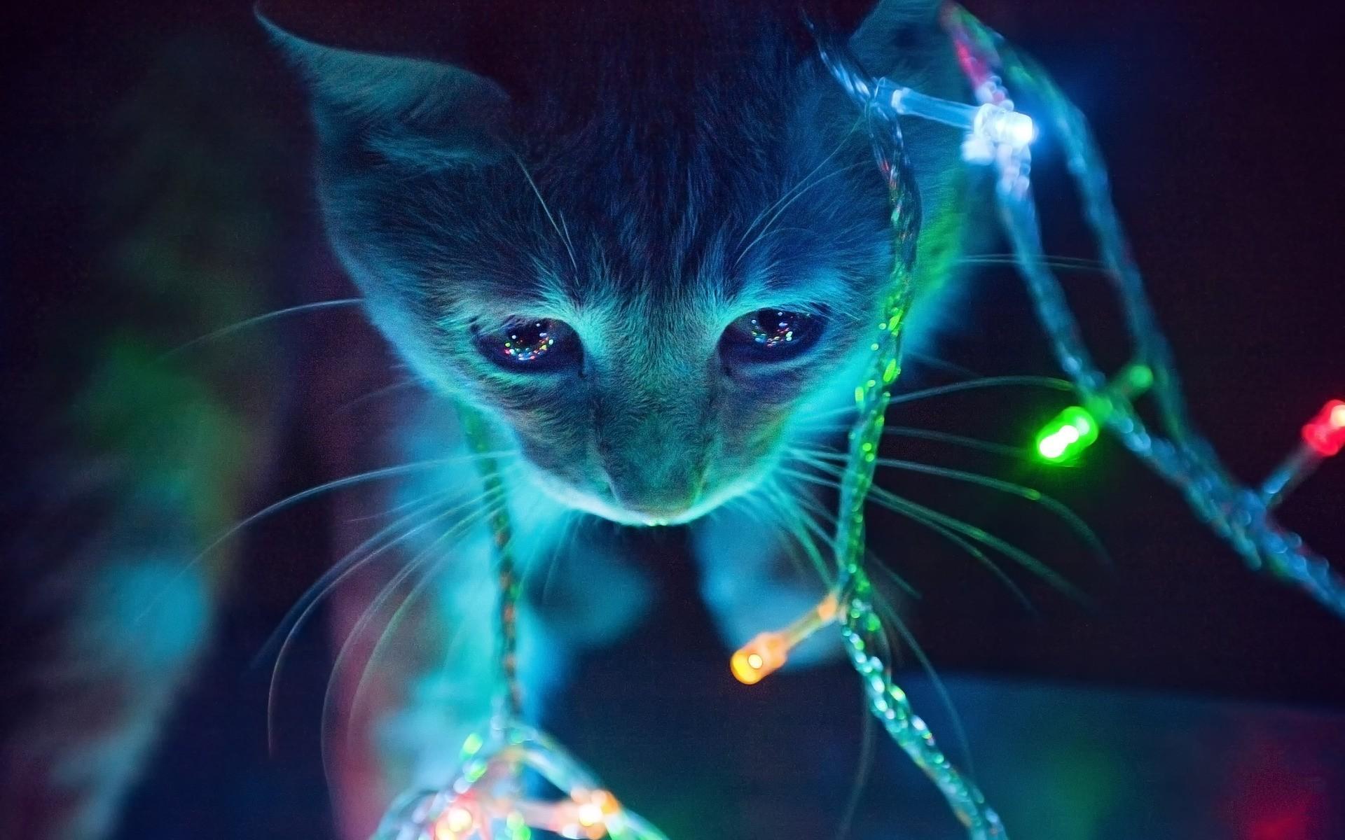 Res: 1920x1200, 3D Cat HQ Background Wallpaper 22676