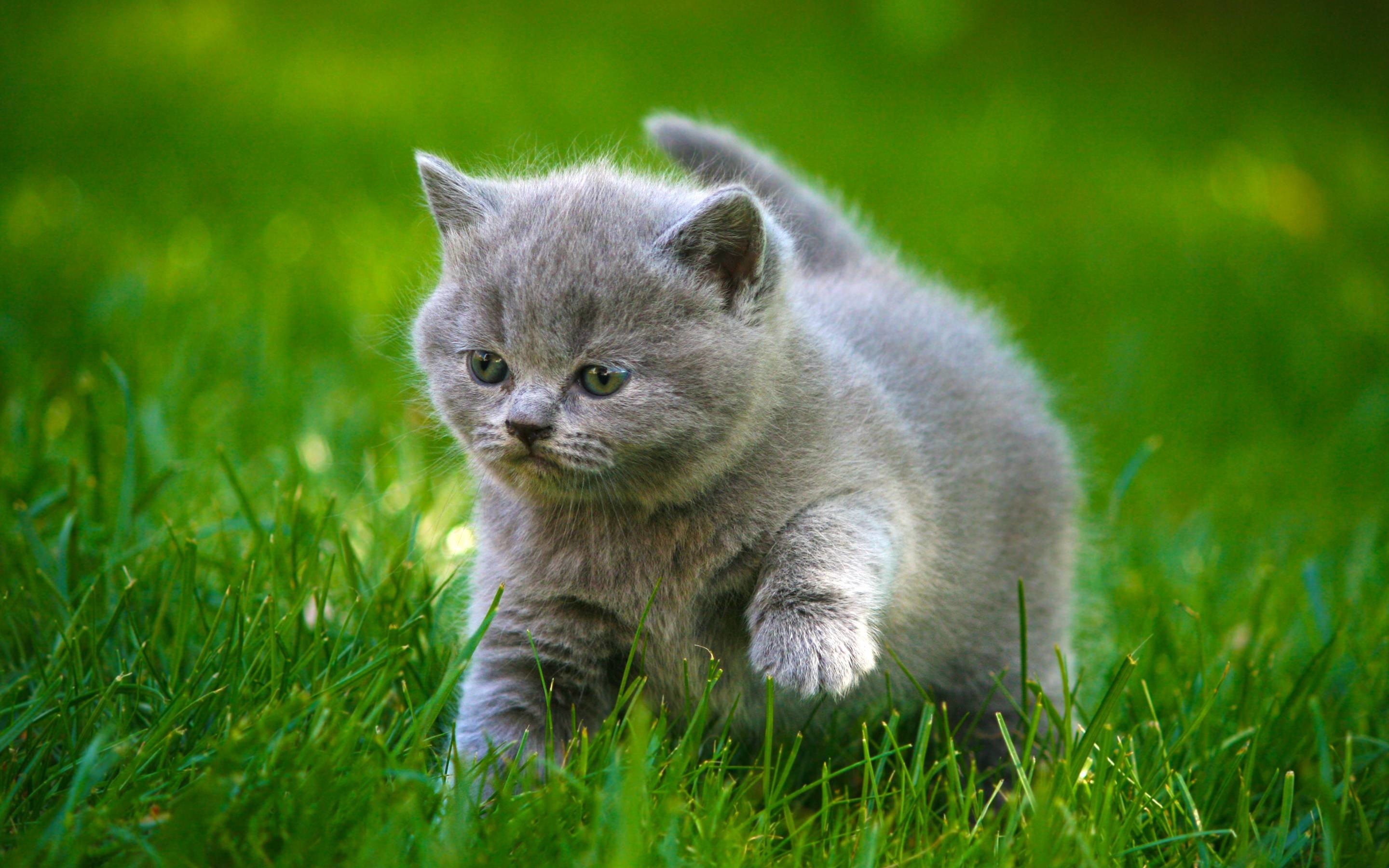 Res: 2880x1800, Full Hd For Cat Wallpaper Cool 3d Cute Fluffy Iphone