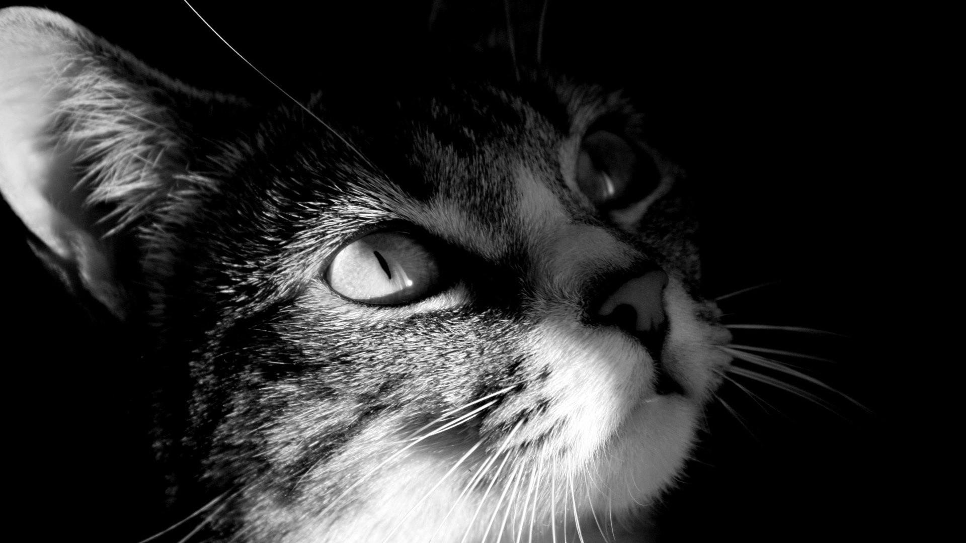 Res: 1920x1080, Cat Wallpaper 4