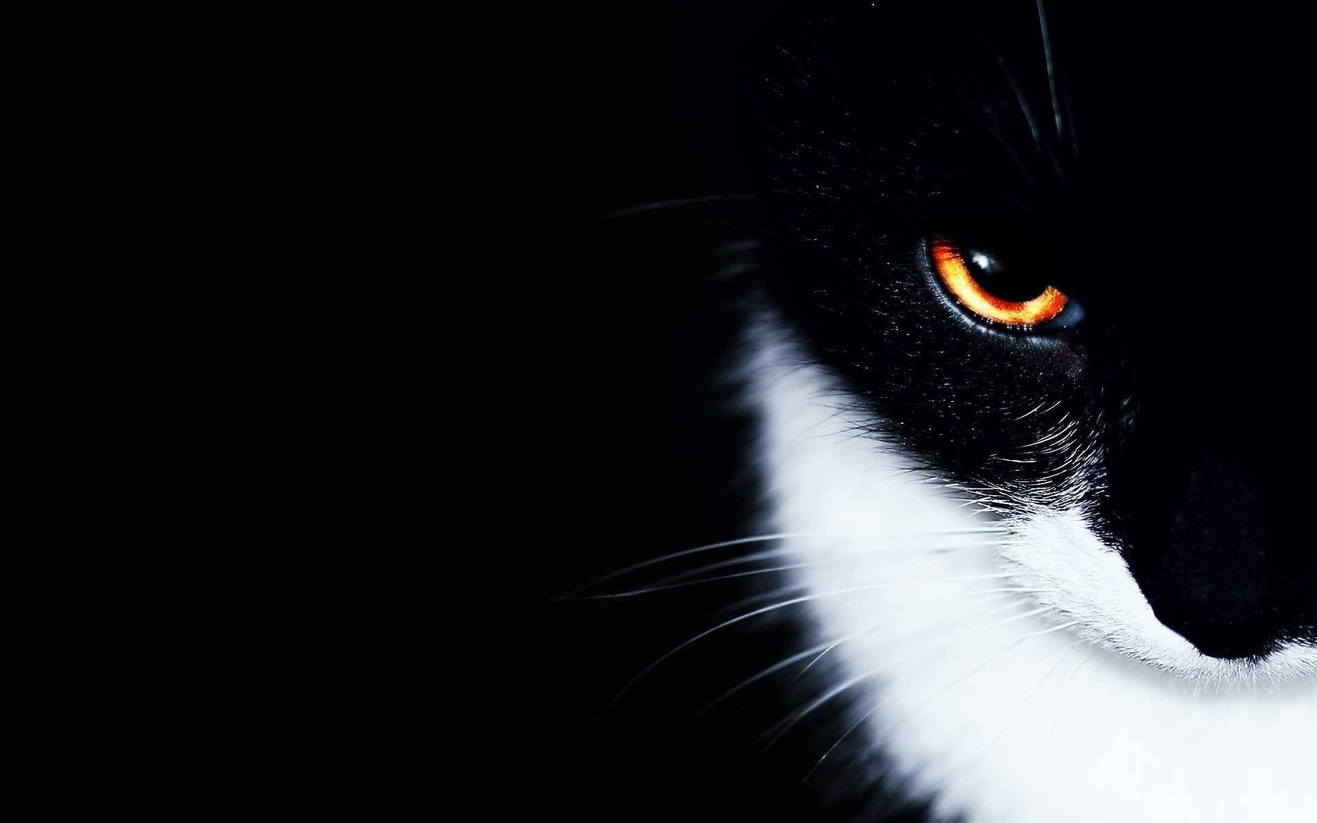 Res: 1920x1200, Black And White Cat Wallpaper | Amazon Walls