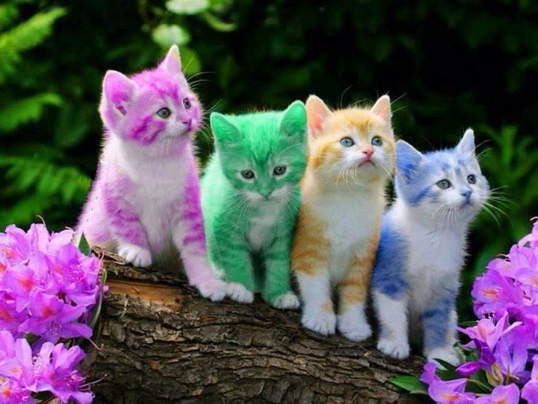 Res: 2880x2160, Cool 3d Wallpaper Cute Fluffy Cat Hd Pics Cats Of Pc