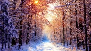 Winter Forest wallpapers
