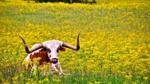 Texas Ranch wallpapers