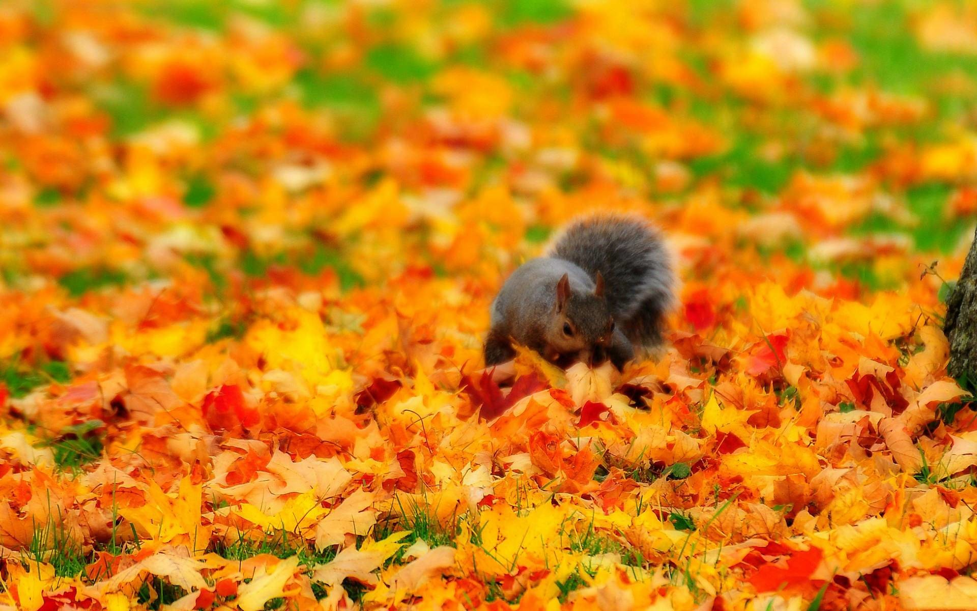 Res: 1920x1200, Fall with Animal Widescreen HD Wallpapers