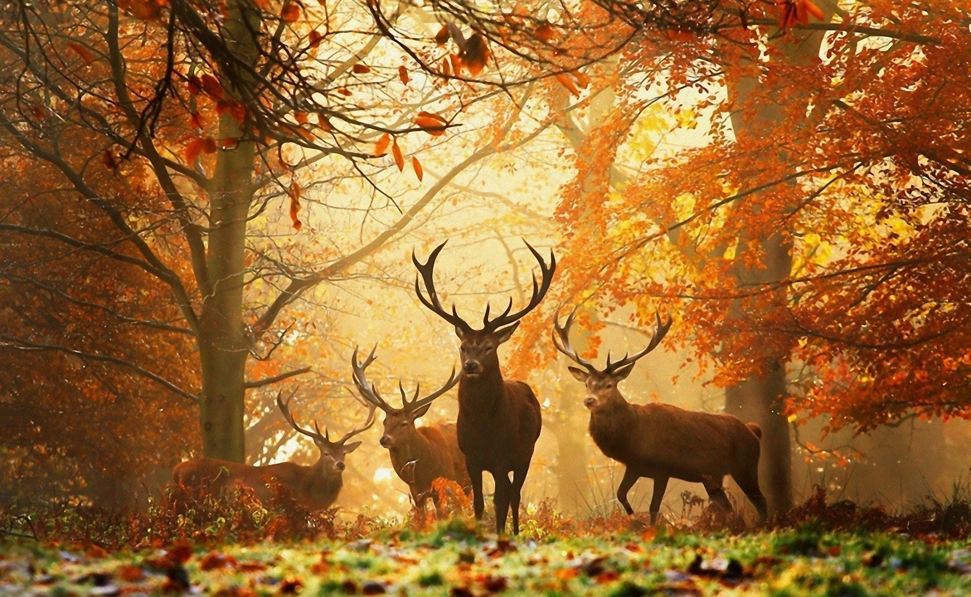 Res: 1920x1180, Animal - Deer Fall Forest Wallpaper