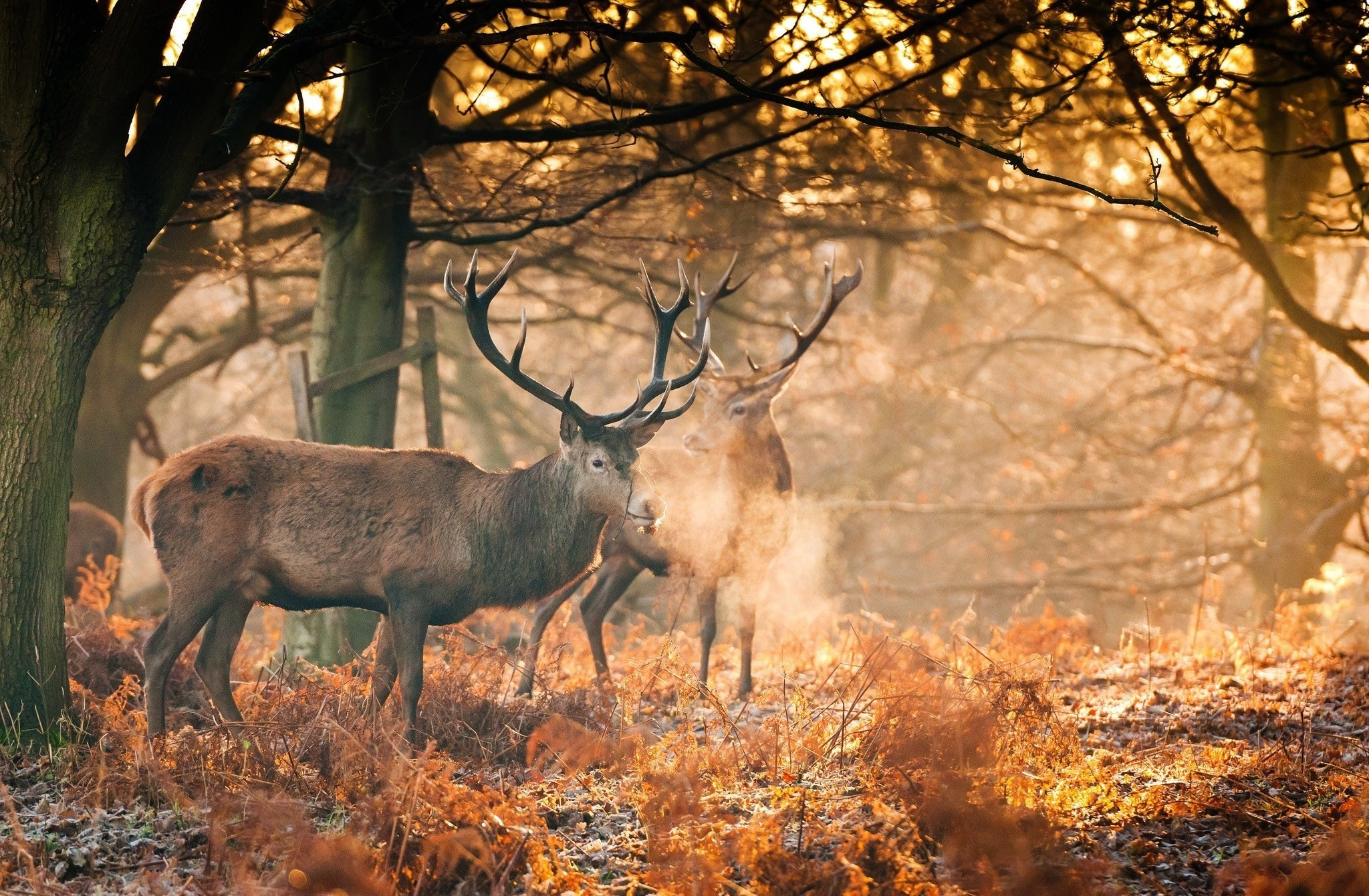 Res: 2048x1340, Animal Fall Forest Sunshine Wallpaper