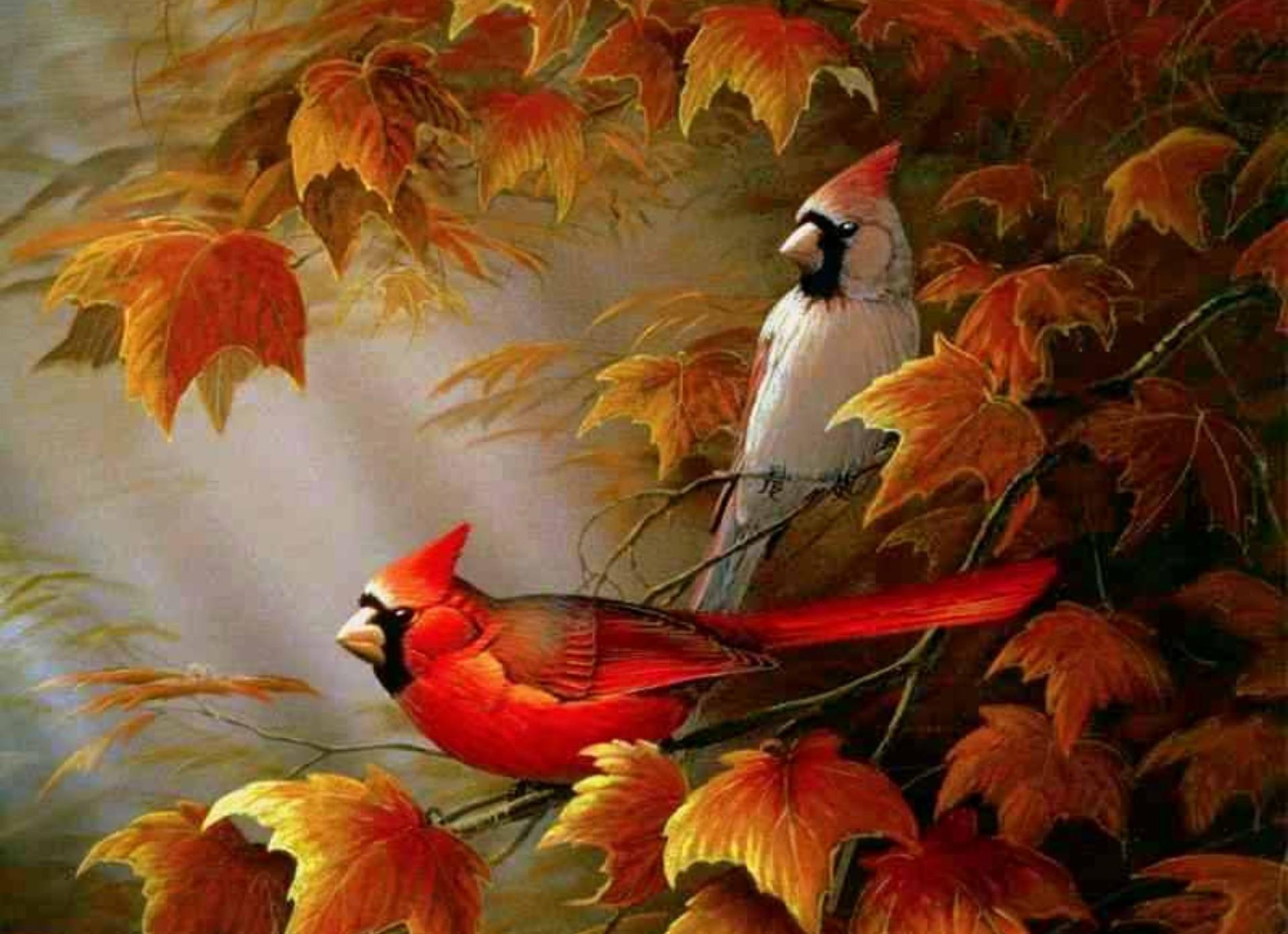 Res: 1920x1392, HD Wallpapers Cardinals birds - Autumn Cardinals